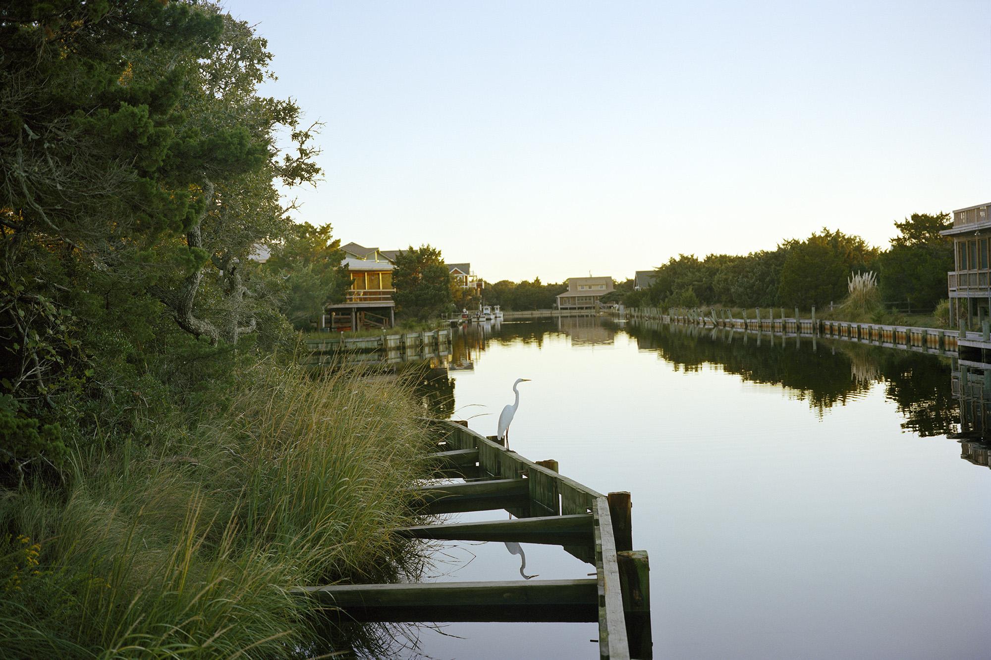 Egret, Faraway Oaks, Ocracoke, NC.