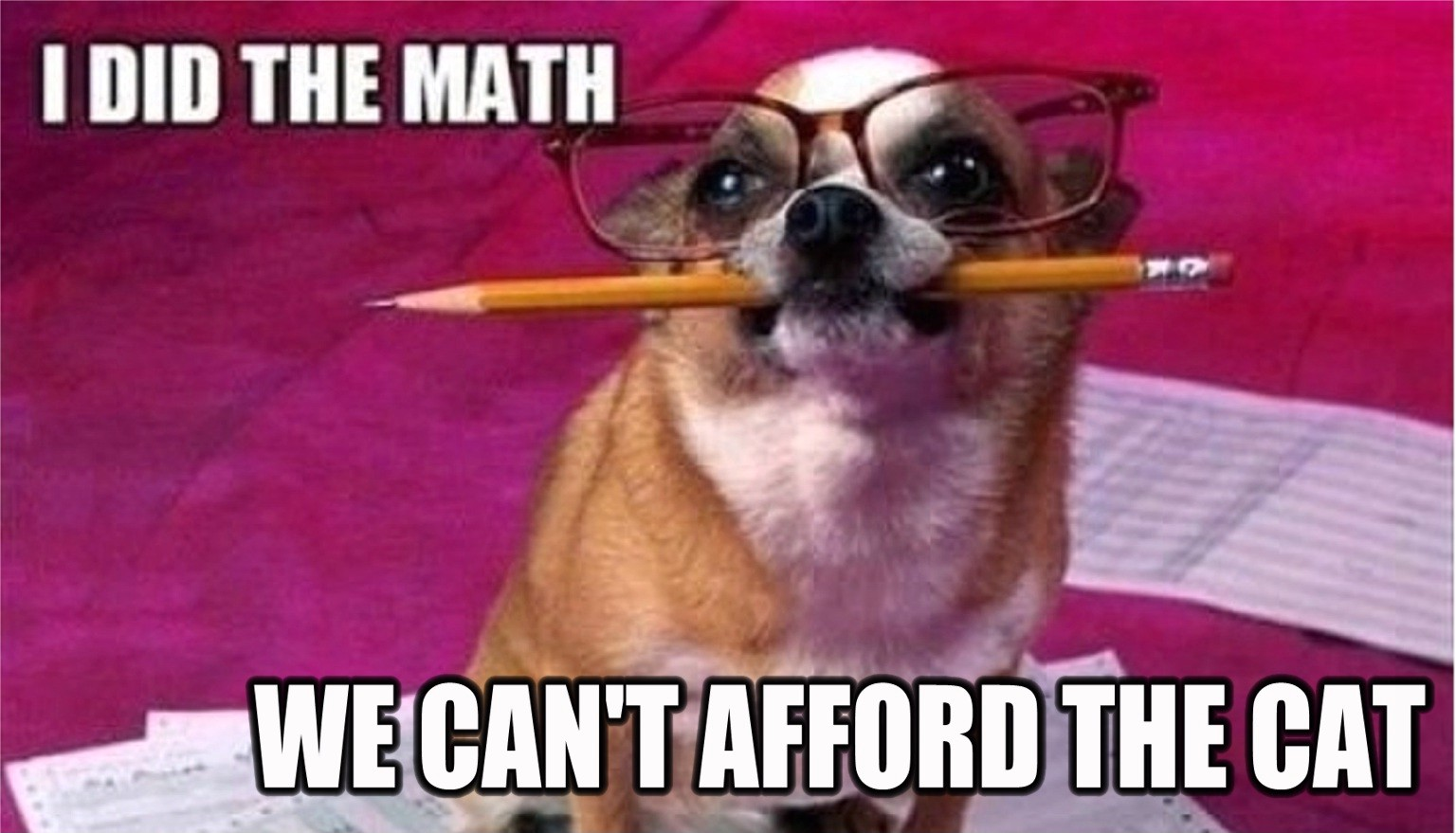 dog-budget.jpg
