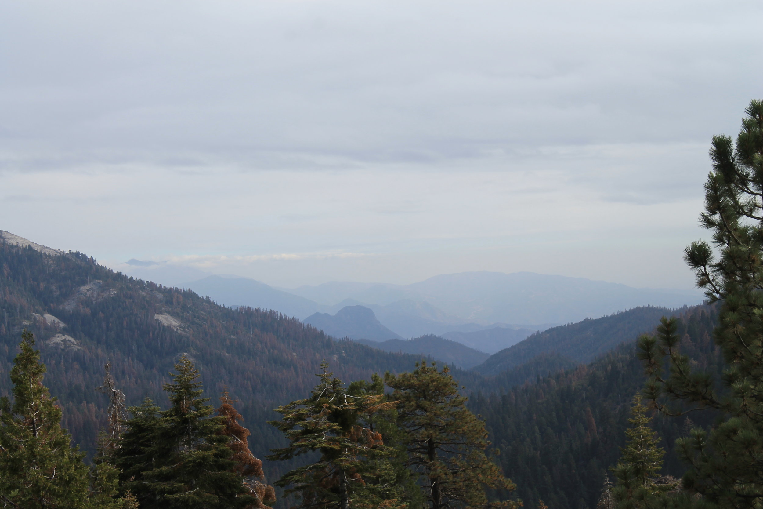 You actually come out  above  the sequoias to cross into Kings Canyon and see some pretty amazing views. When we visited, there were several wildfires going on (nothing like it is this year however) so the view was a bit hazy.
