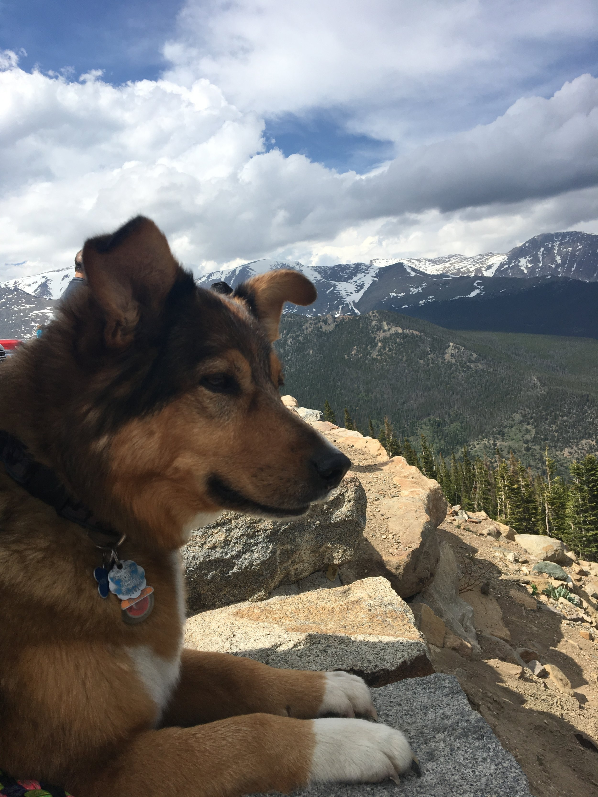 TBT to visiting RMNP last year with Stella. She won't be joining us for this trip (too much wildlife out there!), but she'll be happy that she's staying with Uncle Jeremy and her cousin Waylon (dog)  ;)