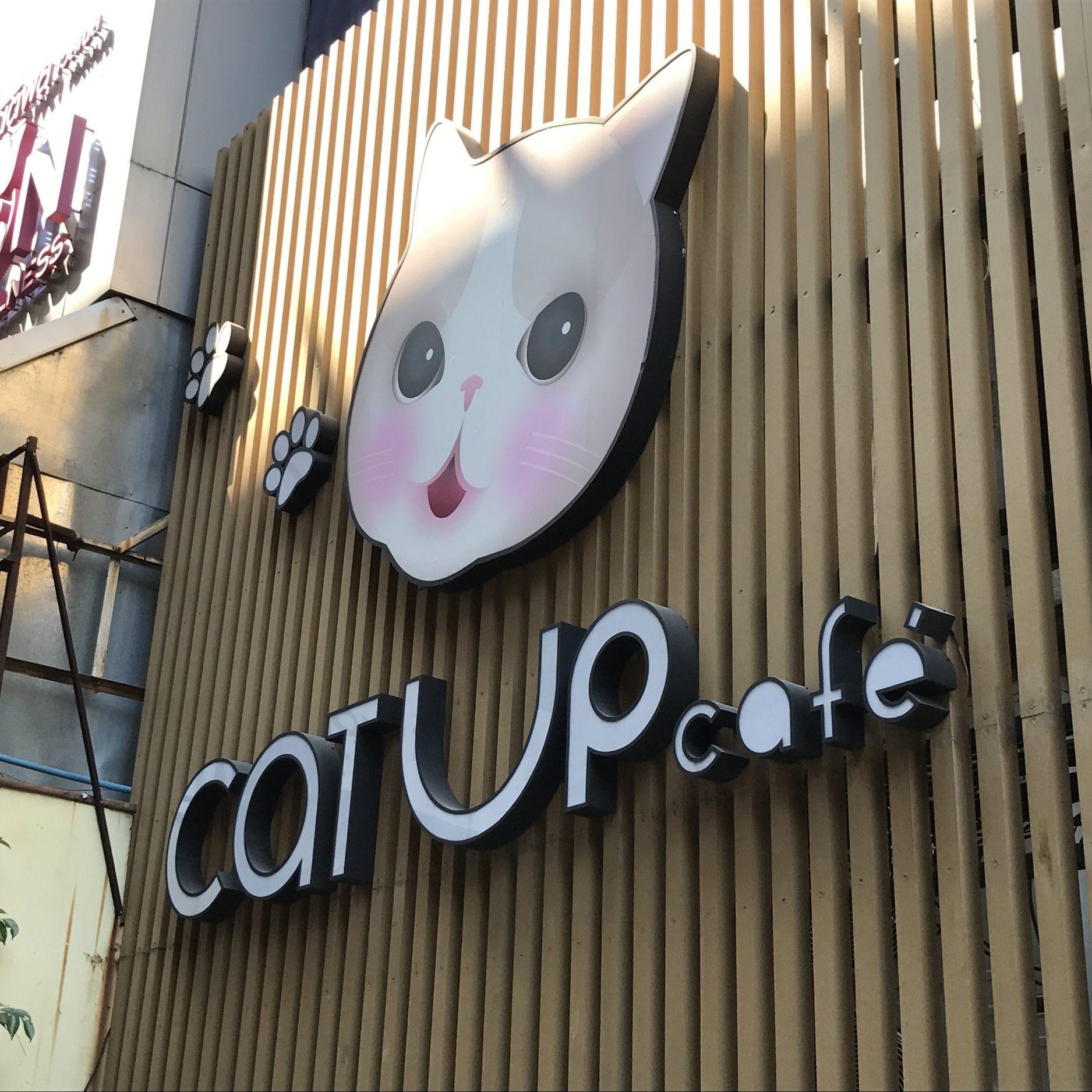 Cat Up Cafe   Bangkok, Thailand