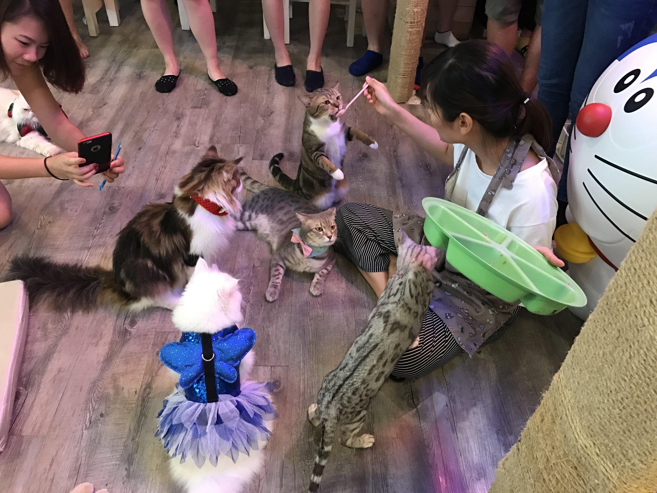 Caturday Cat Cafe feeding cats