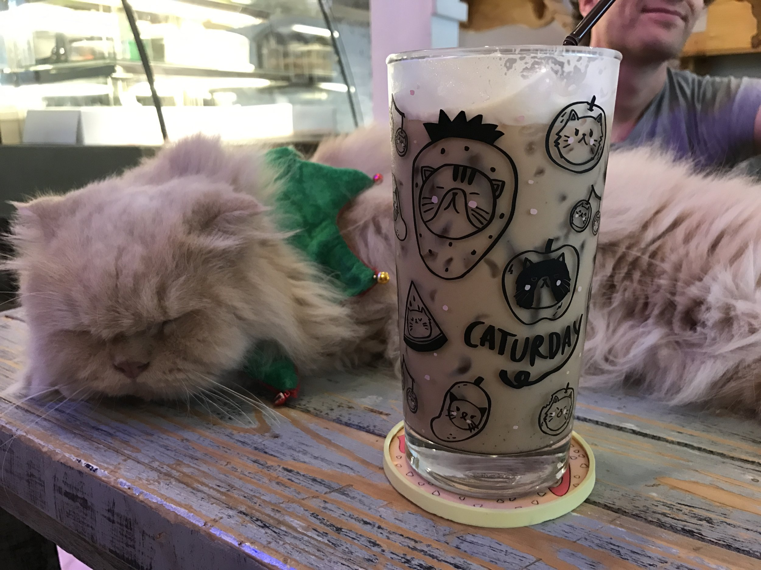 Caturday Cat Cafe drink