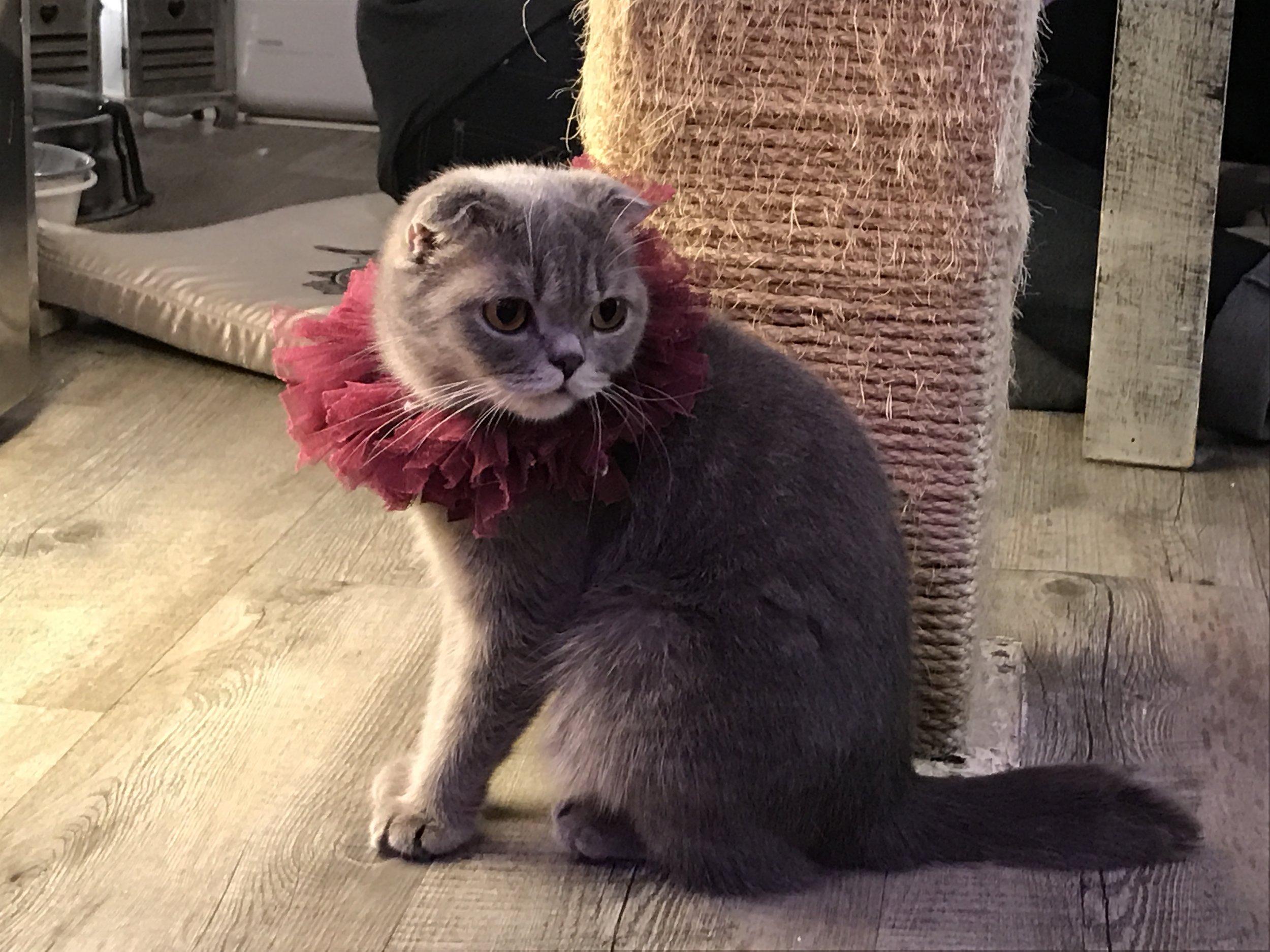Caturday Cat Cafe cute cat