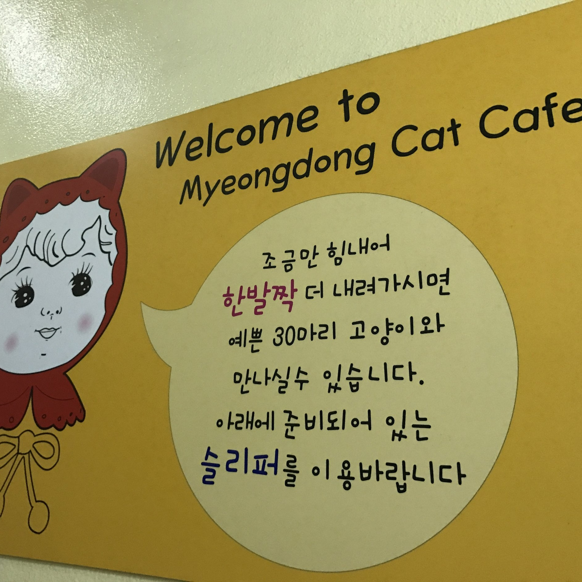 Myeongdong Cafe   Seoul, South Korea