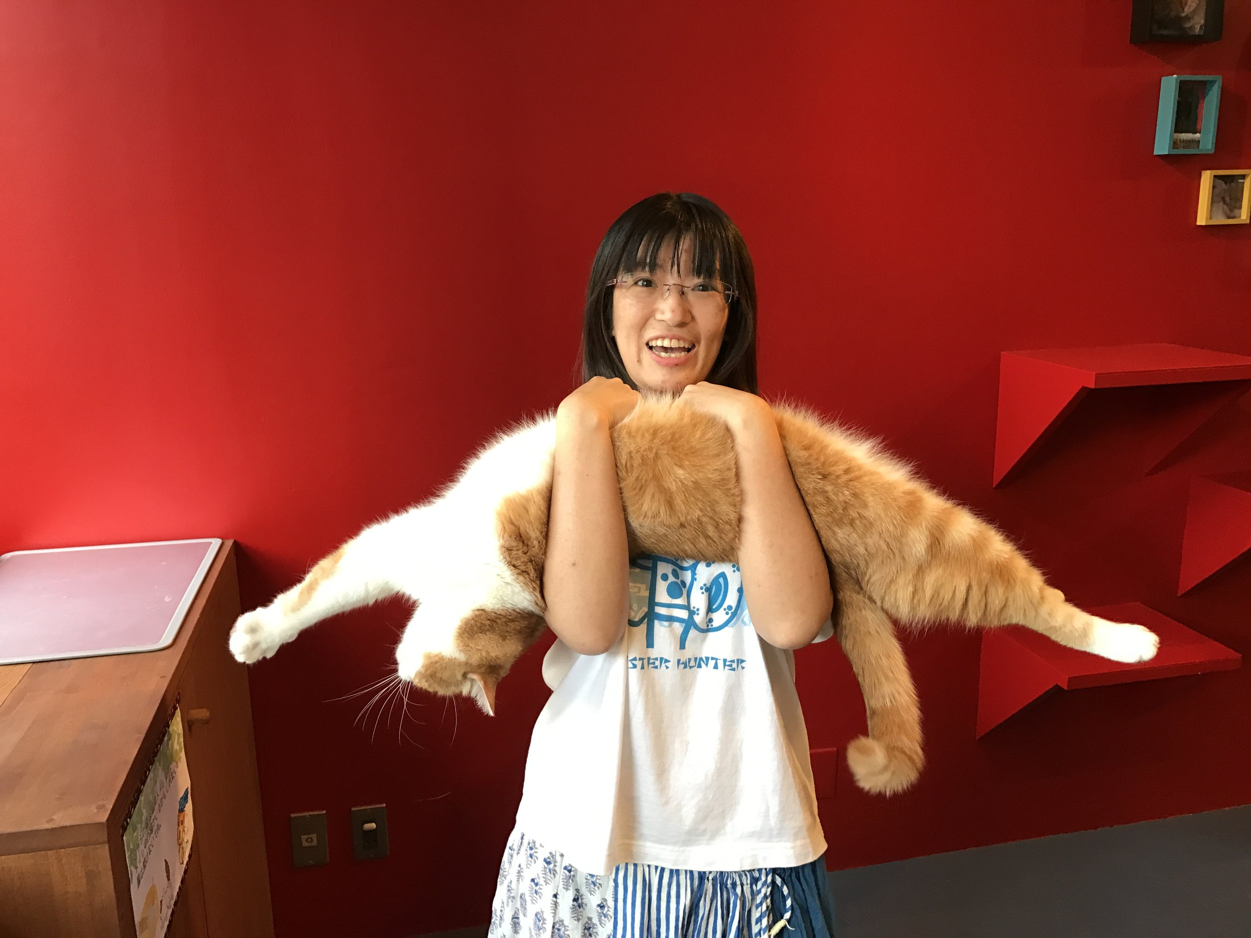 The friendly owner of Cat's Gallery in Nagoya, Japan shows off one flexible feline.