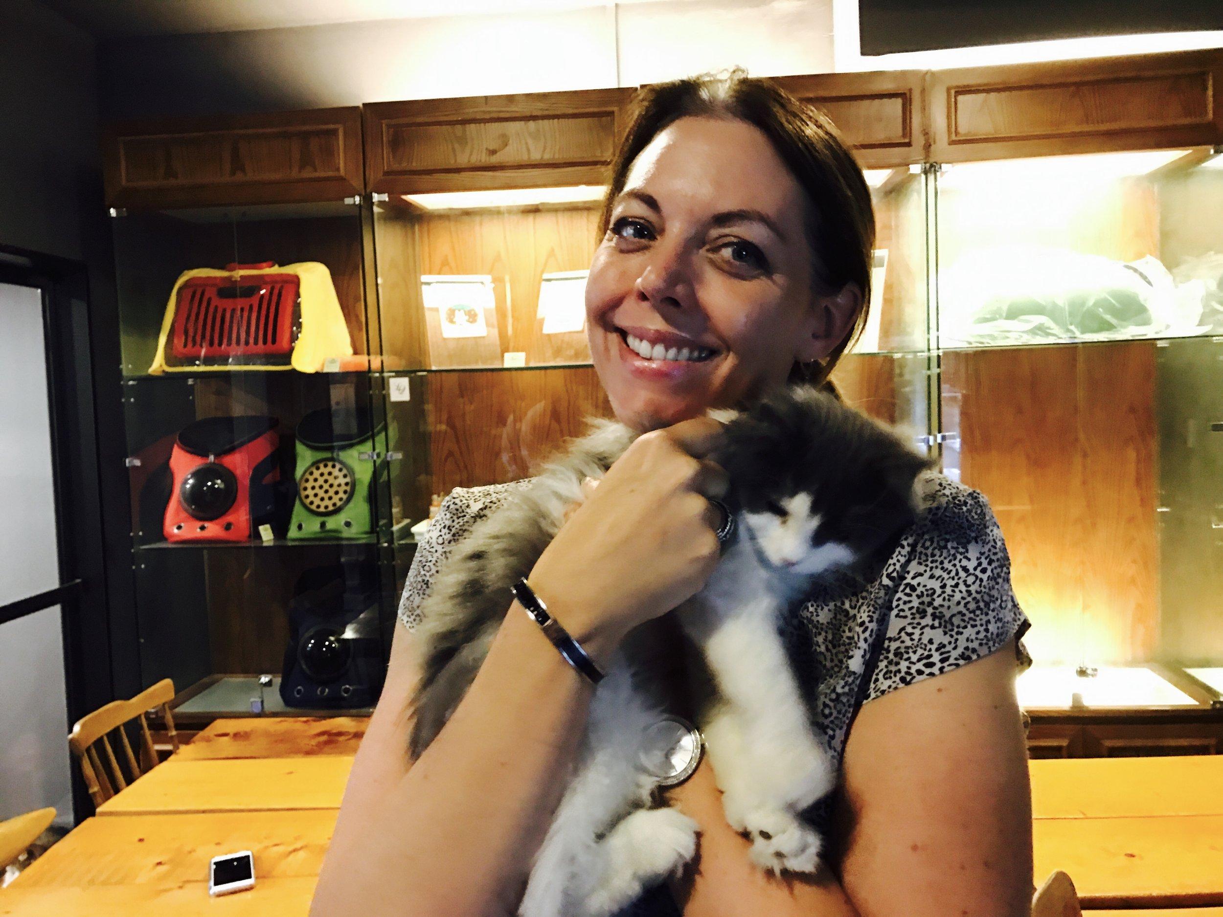 Cuddly kitten at 4rest Norwegian Cat Cafe in Seoul, South Korea