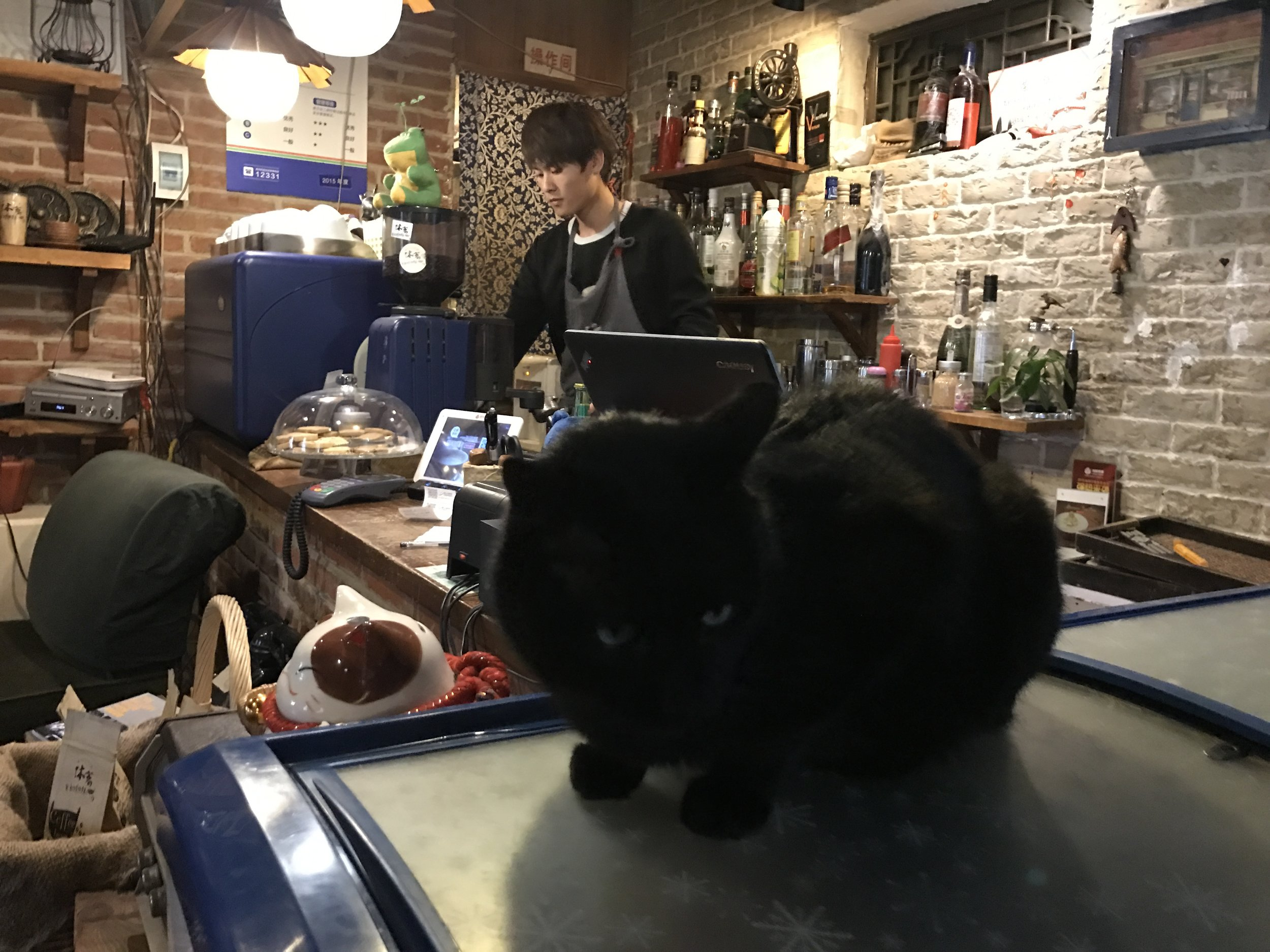 L'infusion has a chill vibe and is more cafe than cat