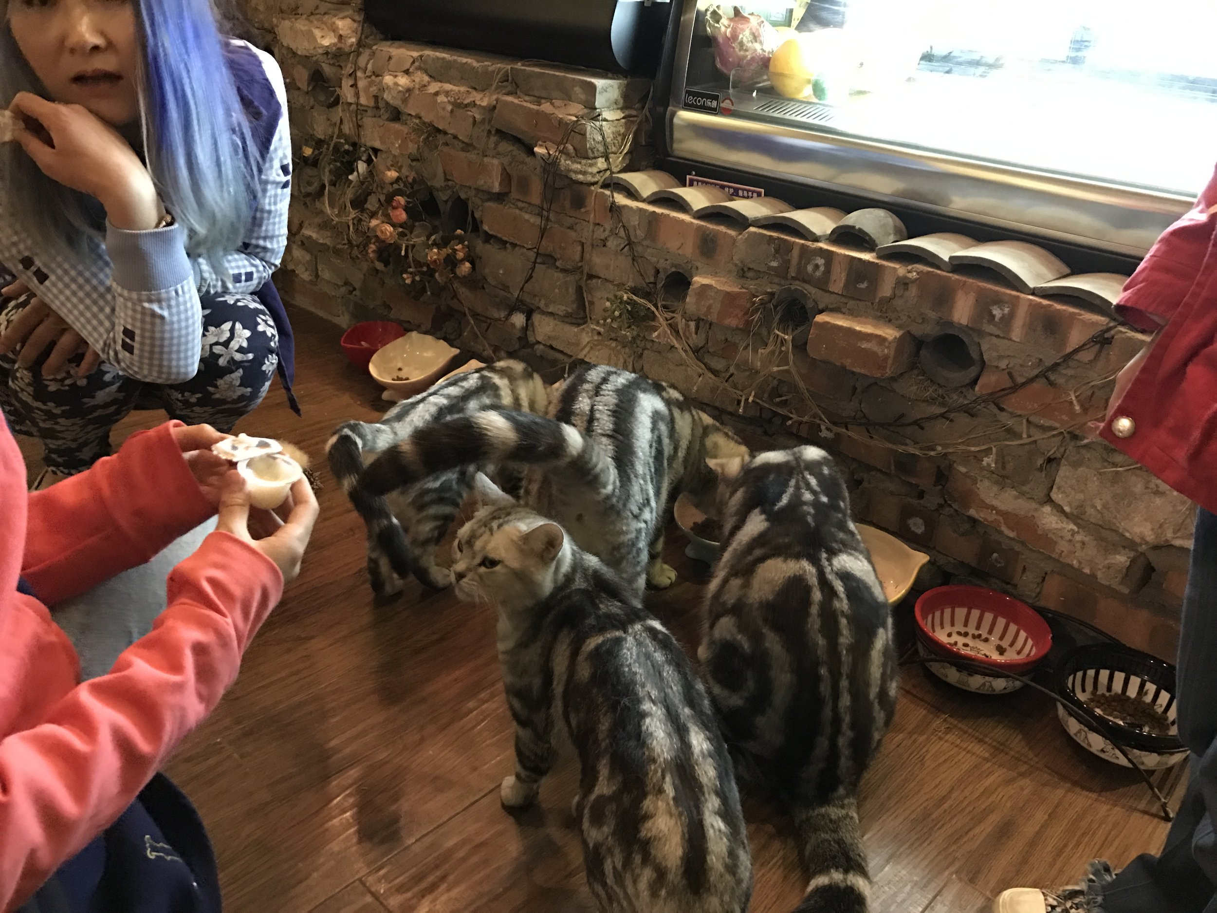 Feeding time at Cat World in Beijing
