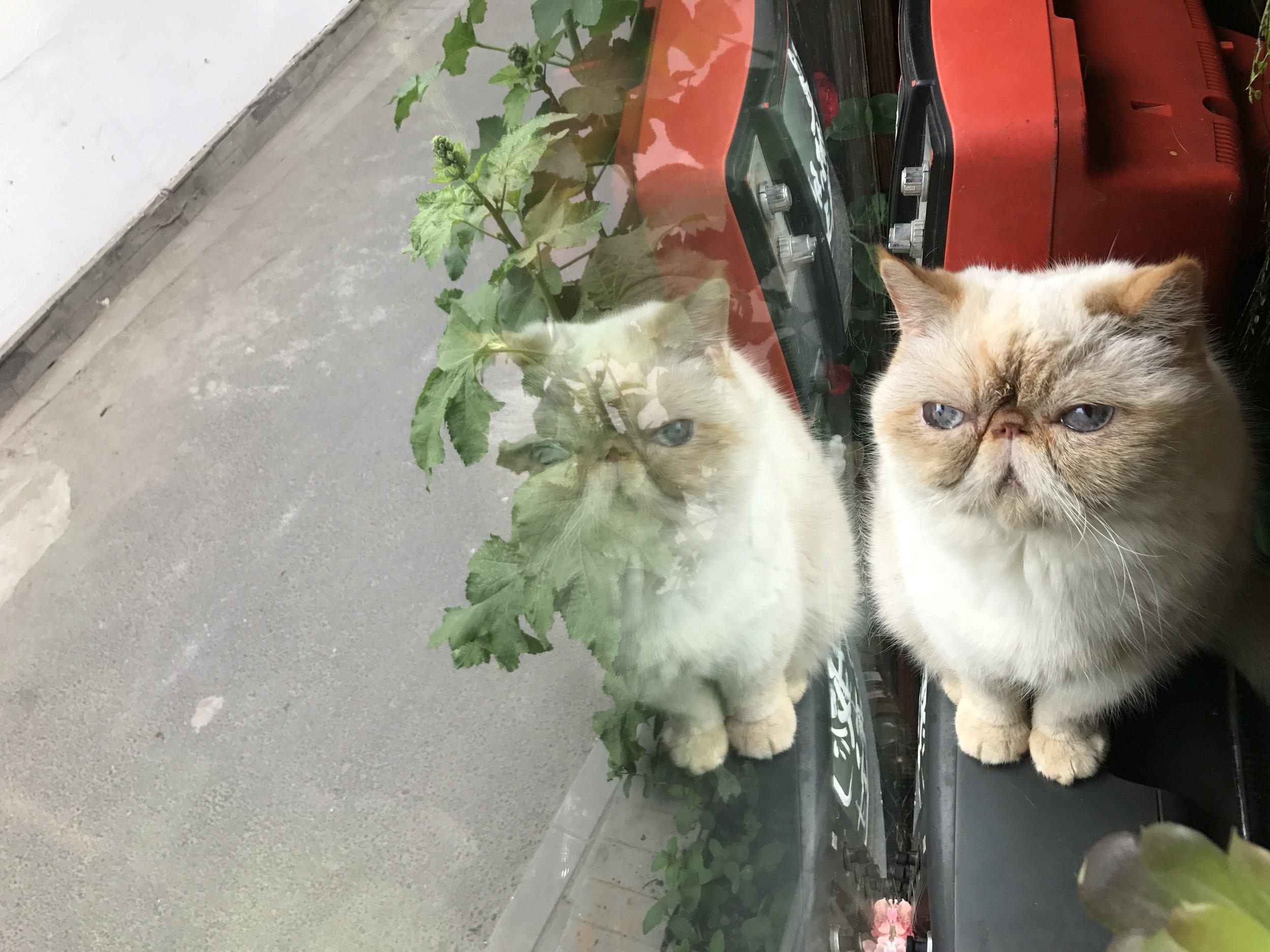 Cat in the window at World's End Girlfriend in Beijing