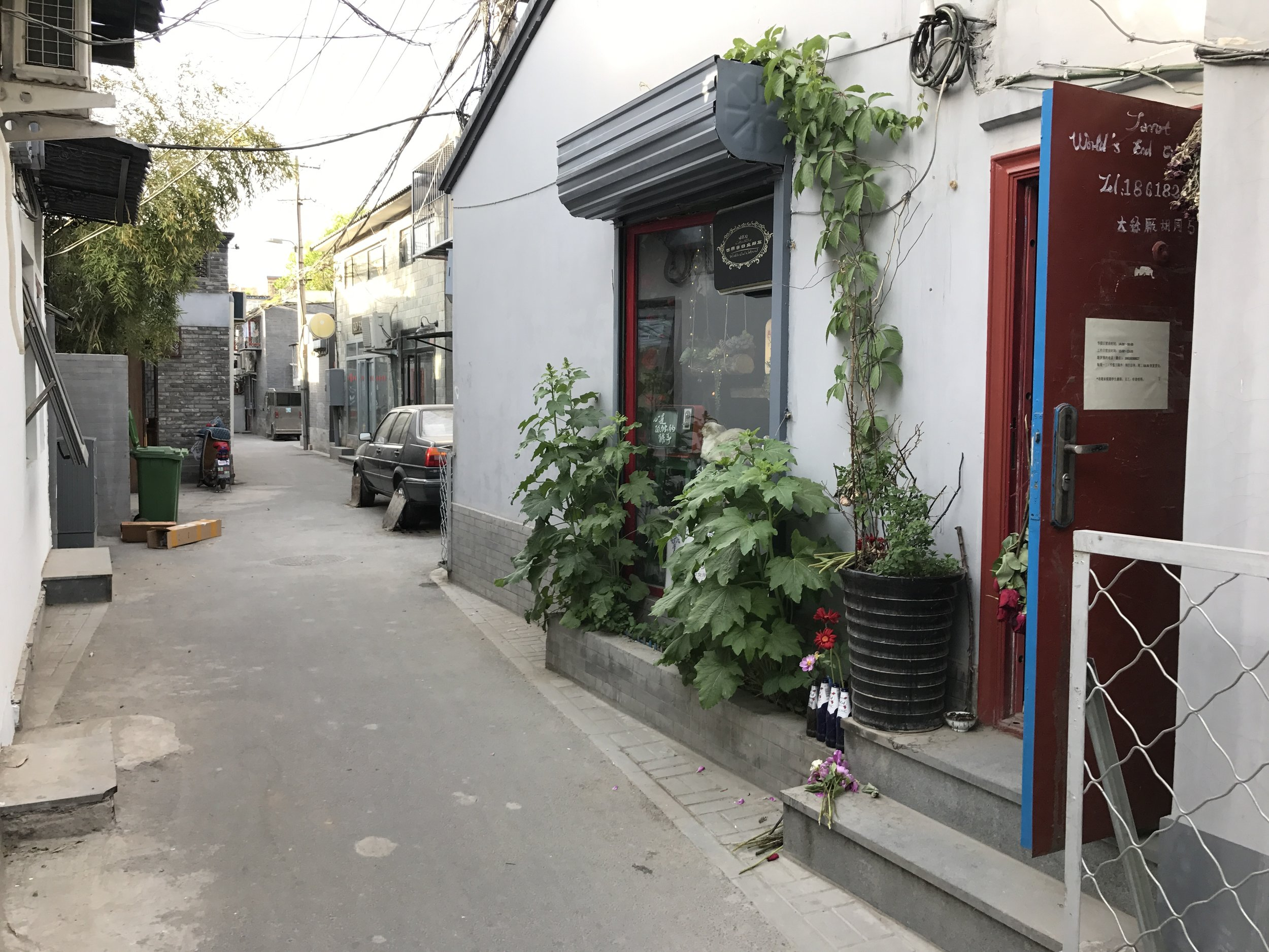 World's End Girlfriend is a cat cafe and bar in Beijing