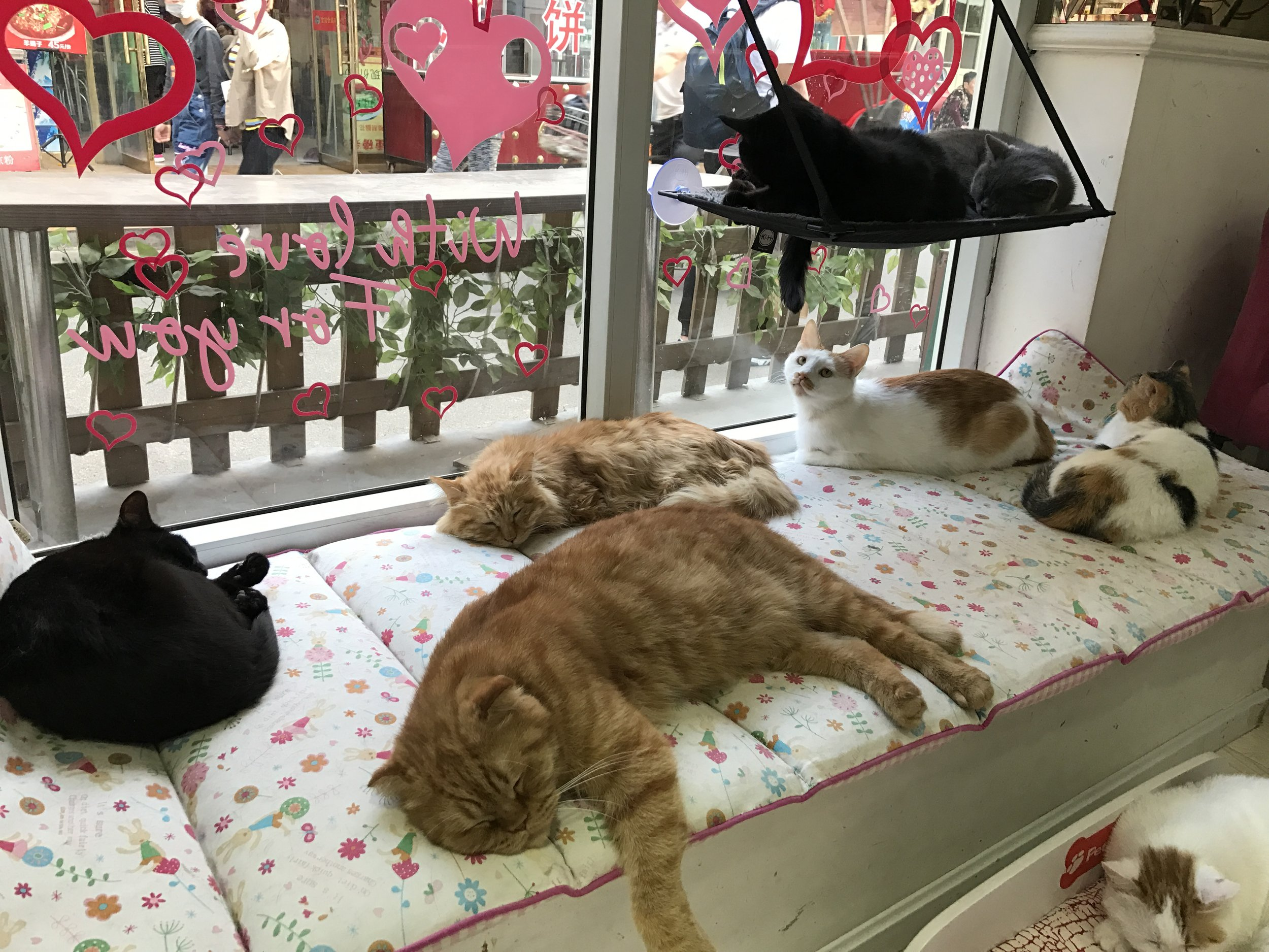 About 30 cats live at Cat Posthouse