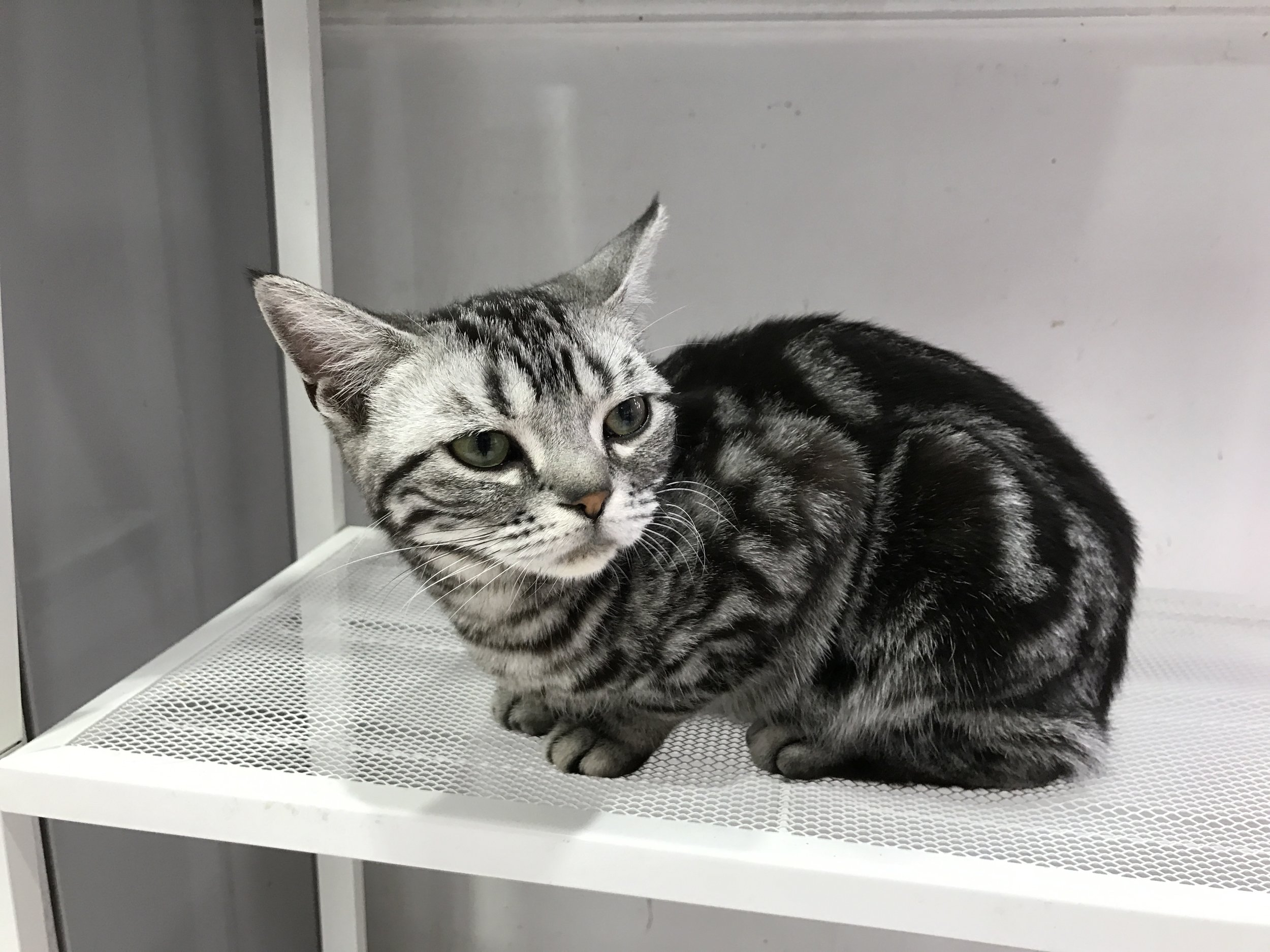An adorable kitten at Cat Posthouse