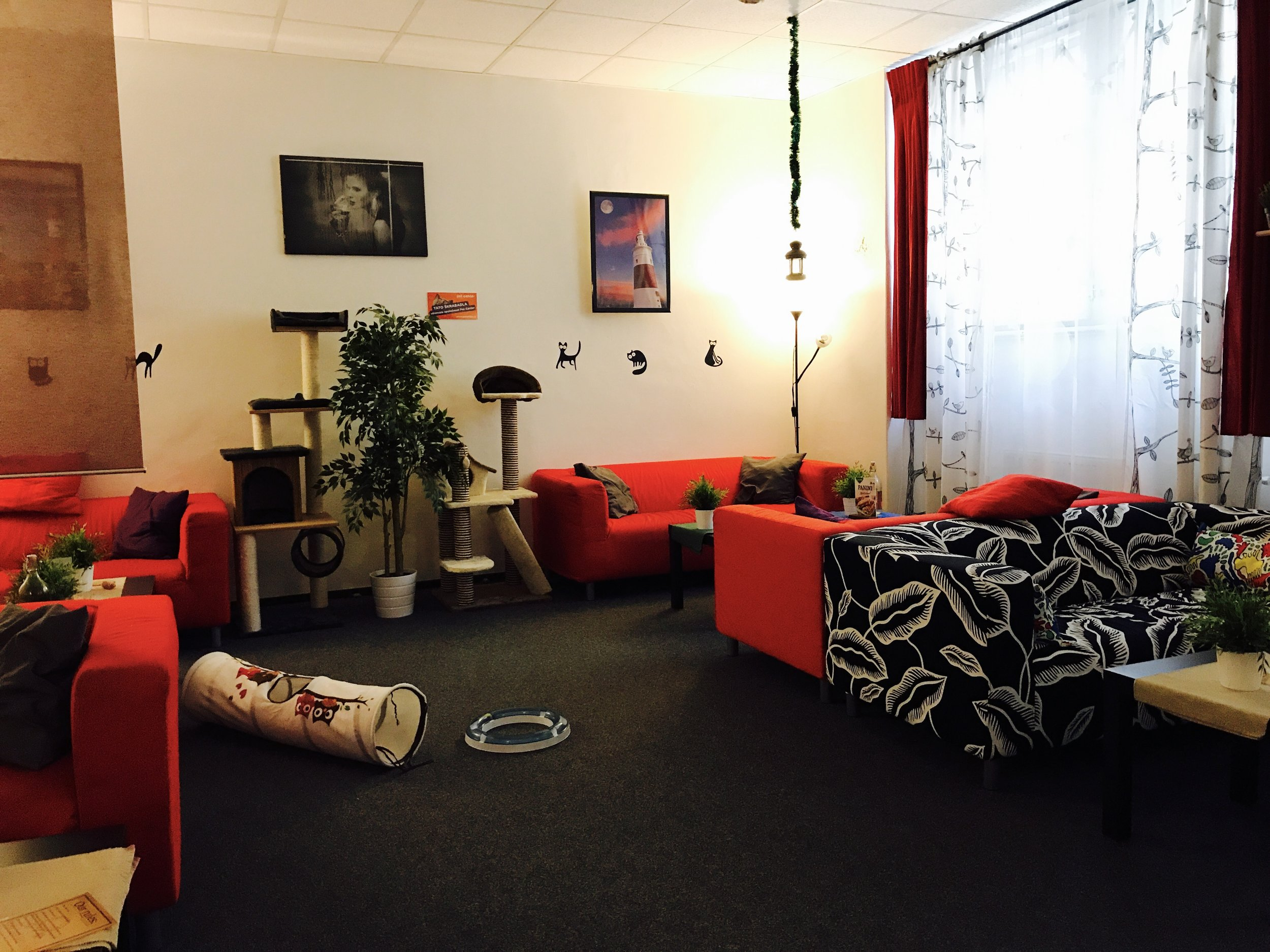 Cat Cafe Prague is located in New Town, adjacent to popular tourist area Old Town
