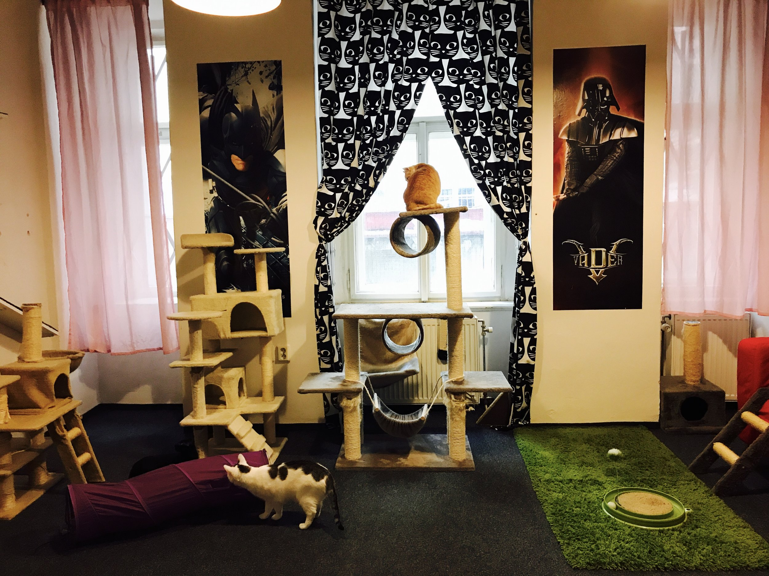 In addition to the cat room, there is a video game room