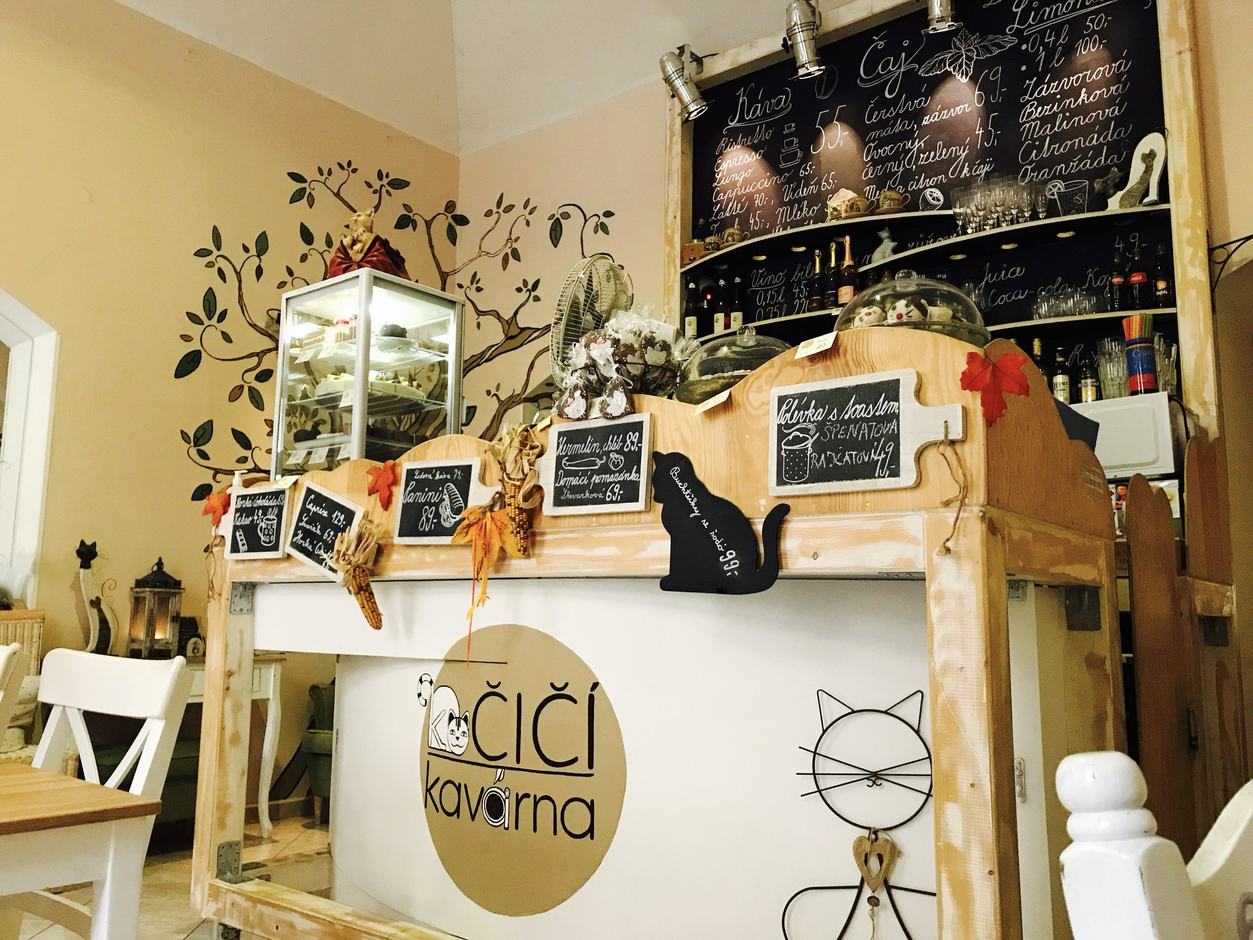 Kocici Kavarna is a beautiful cat cafe in Prague, Czech Republic