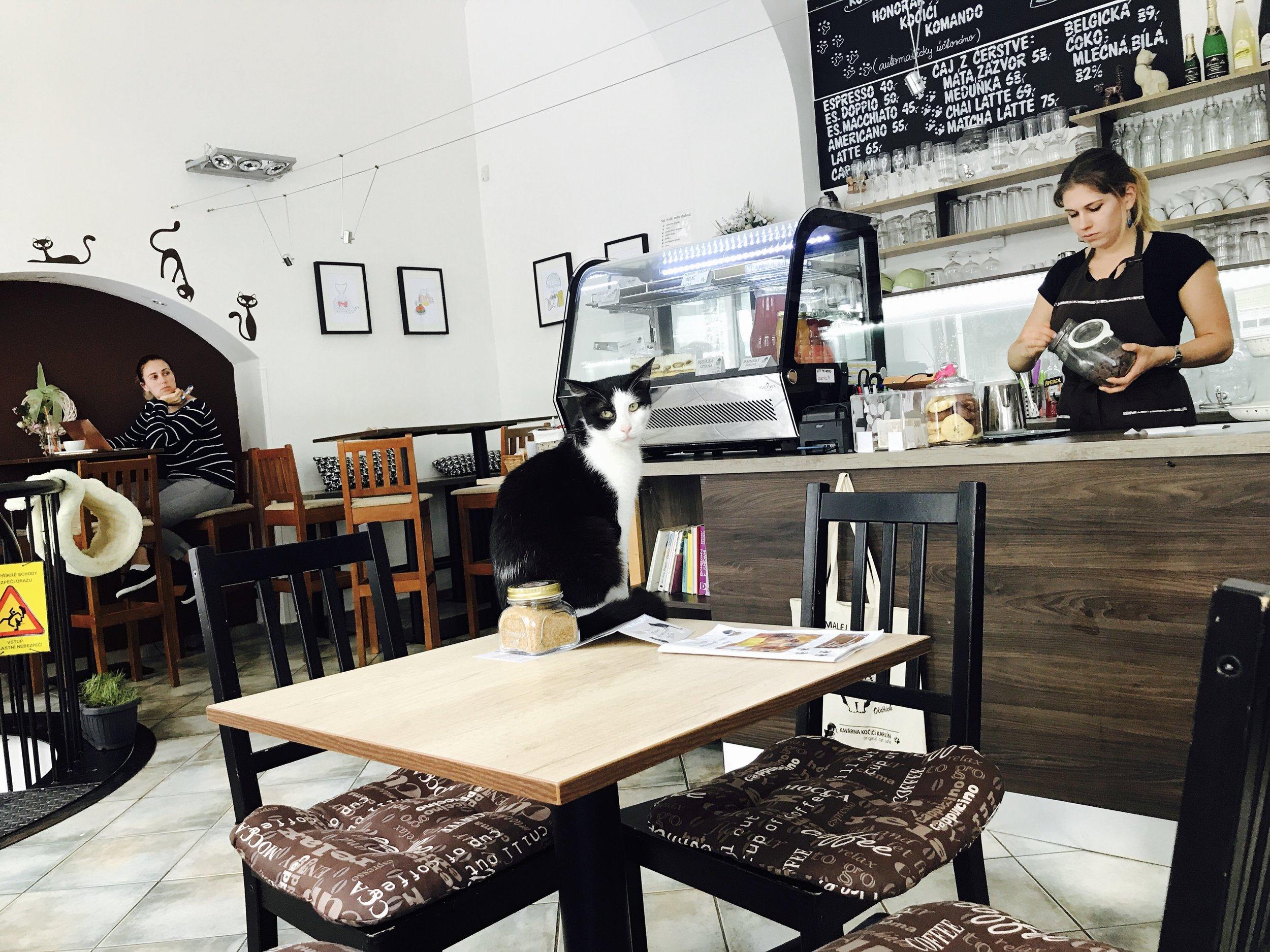 Kavarna Kocici is another beautiful cat cafe in Prague