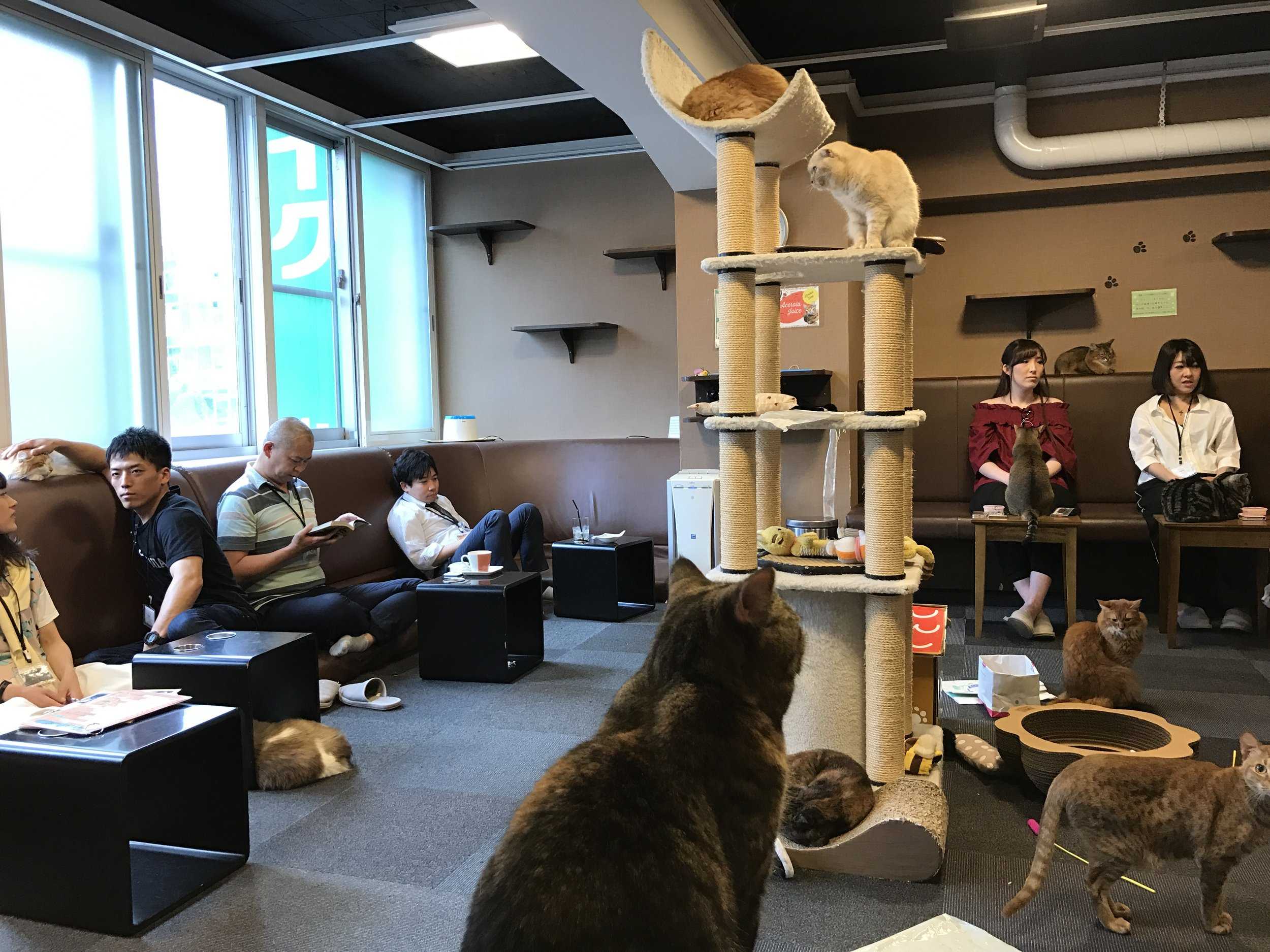 Cat Cafe Calico Shinjuku The Neighbor S Cat