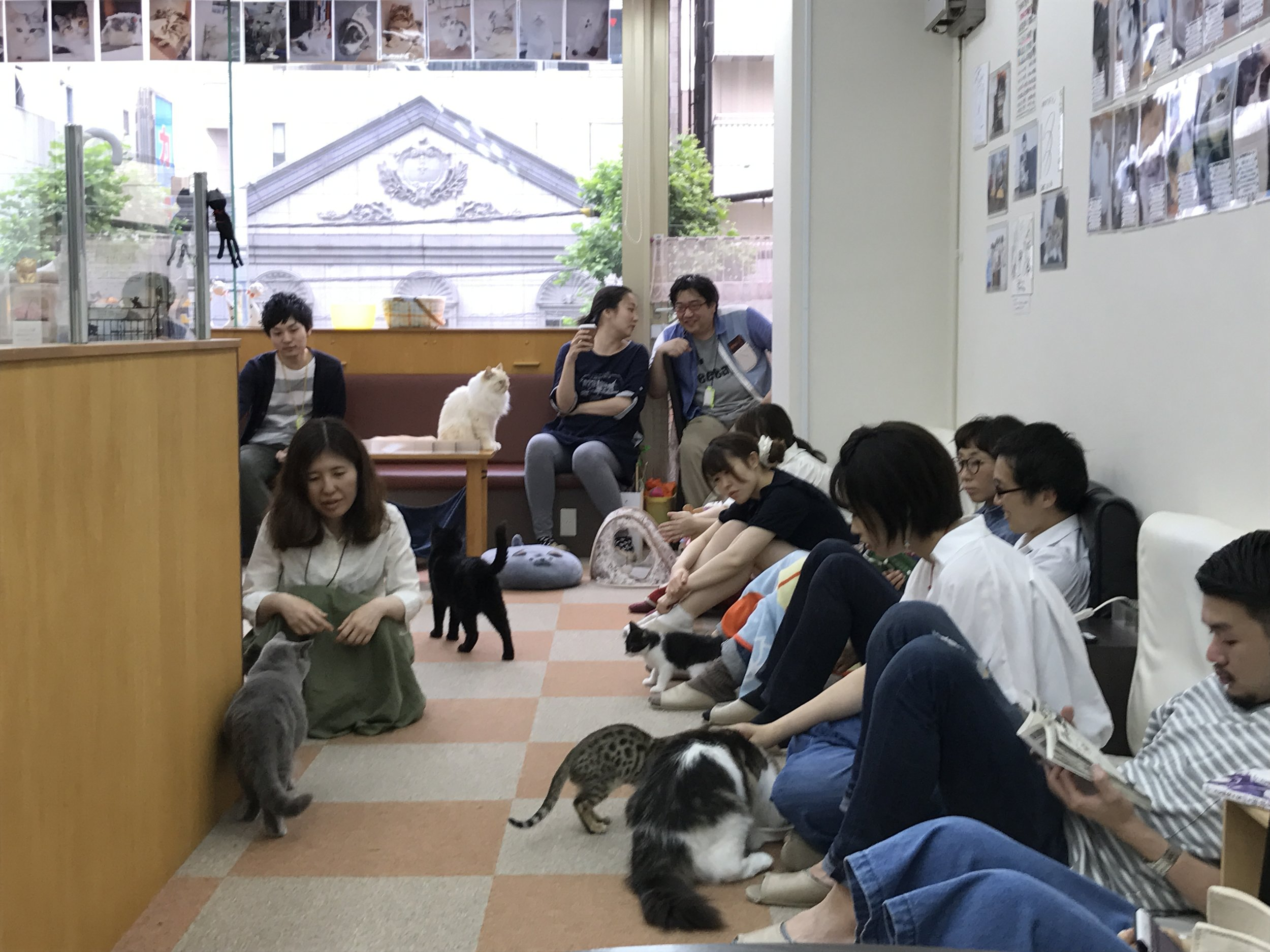 Cat Cafe Nyankoto The Neighbor S Cat