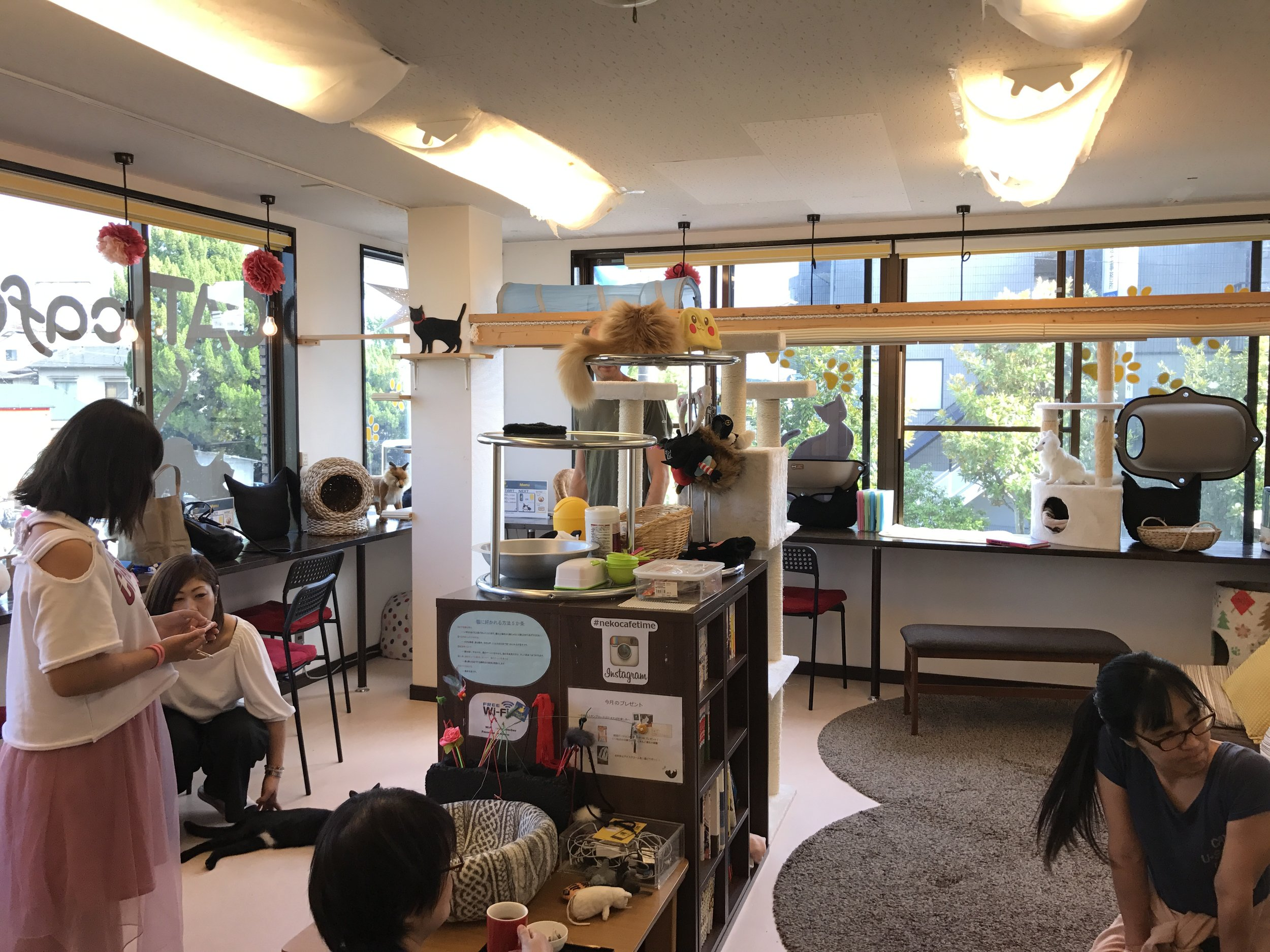 Neko Cafe Time is another great cat cafe in Kyoto, Japan
