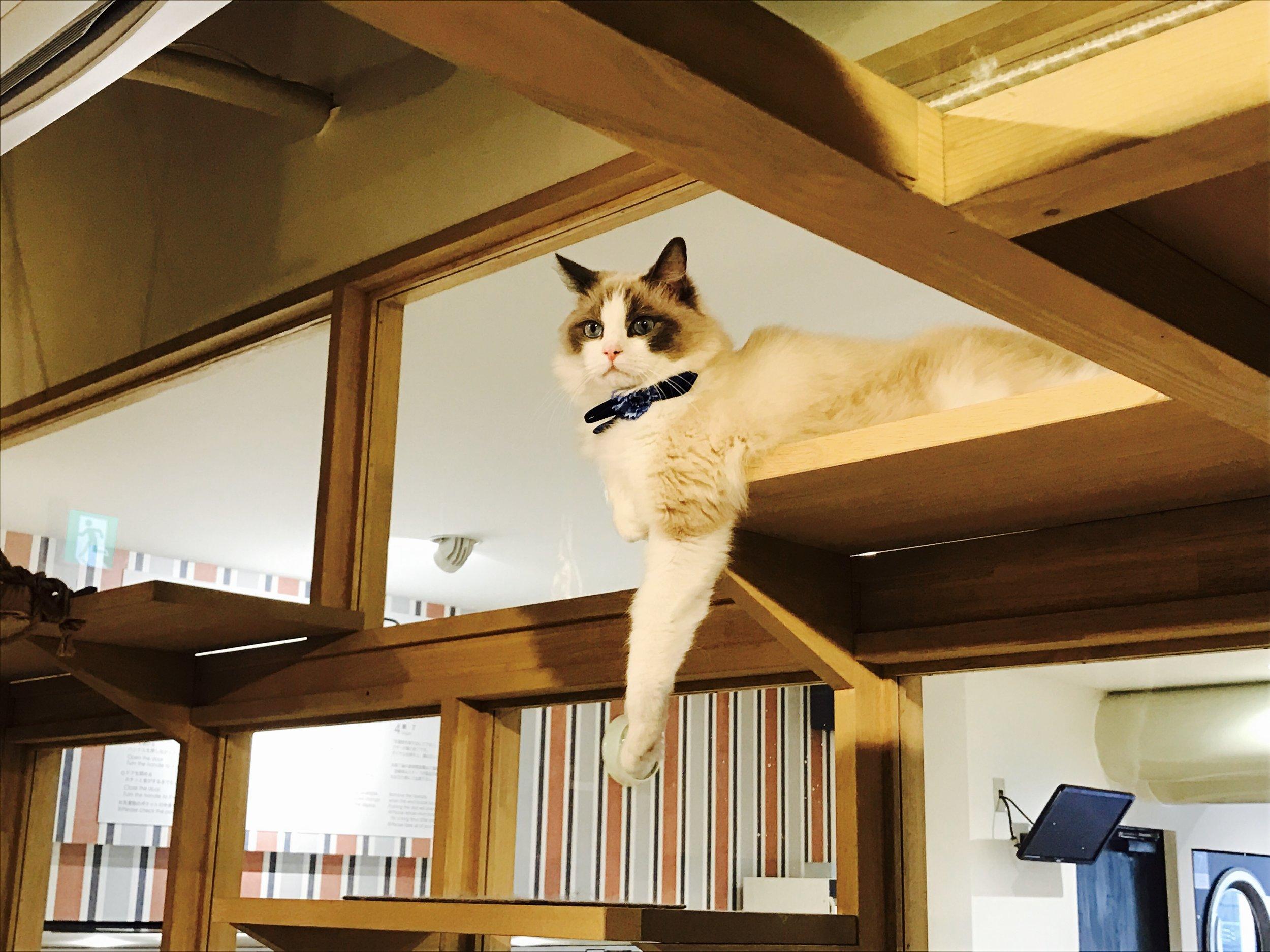 Nag_CatsGallery_02.jpg