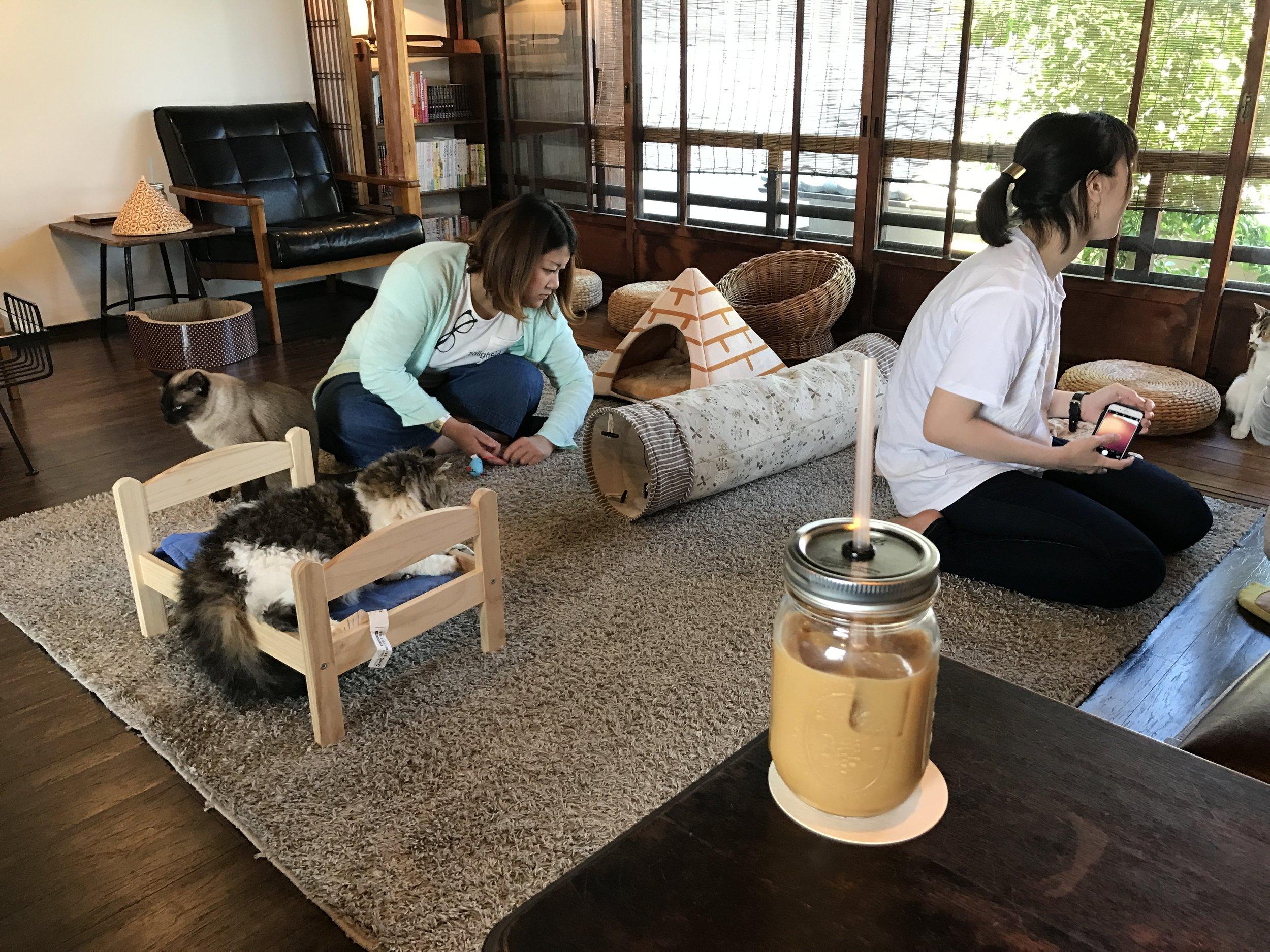 Cat Apartment Coffee, Kyoto, Japan