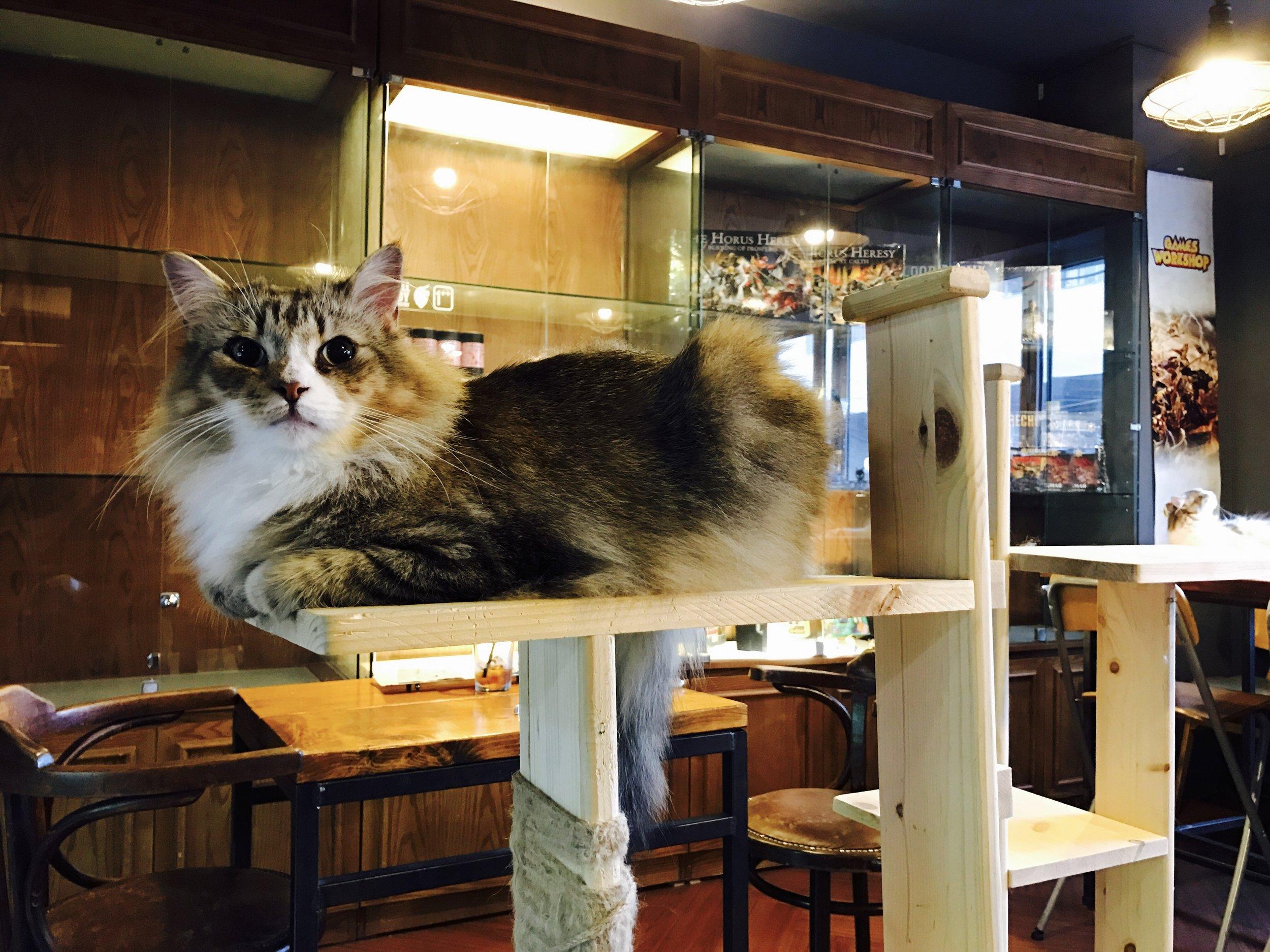 4Rest Norwegian Cat Cafe, Seoul, South Korea