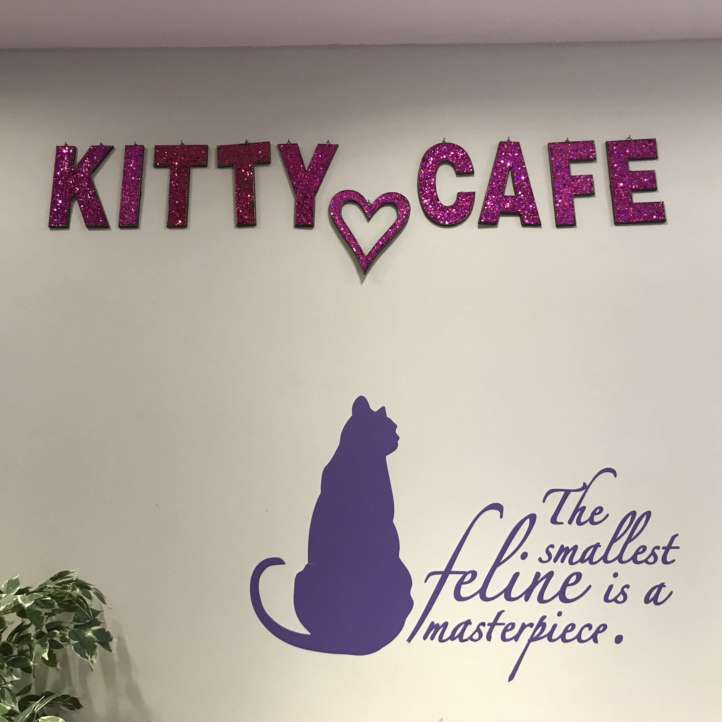 Kitty Cafe   Nottingham, UK