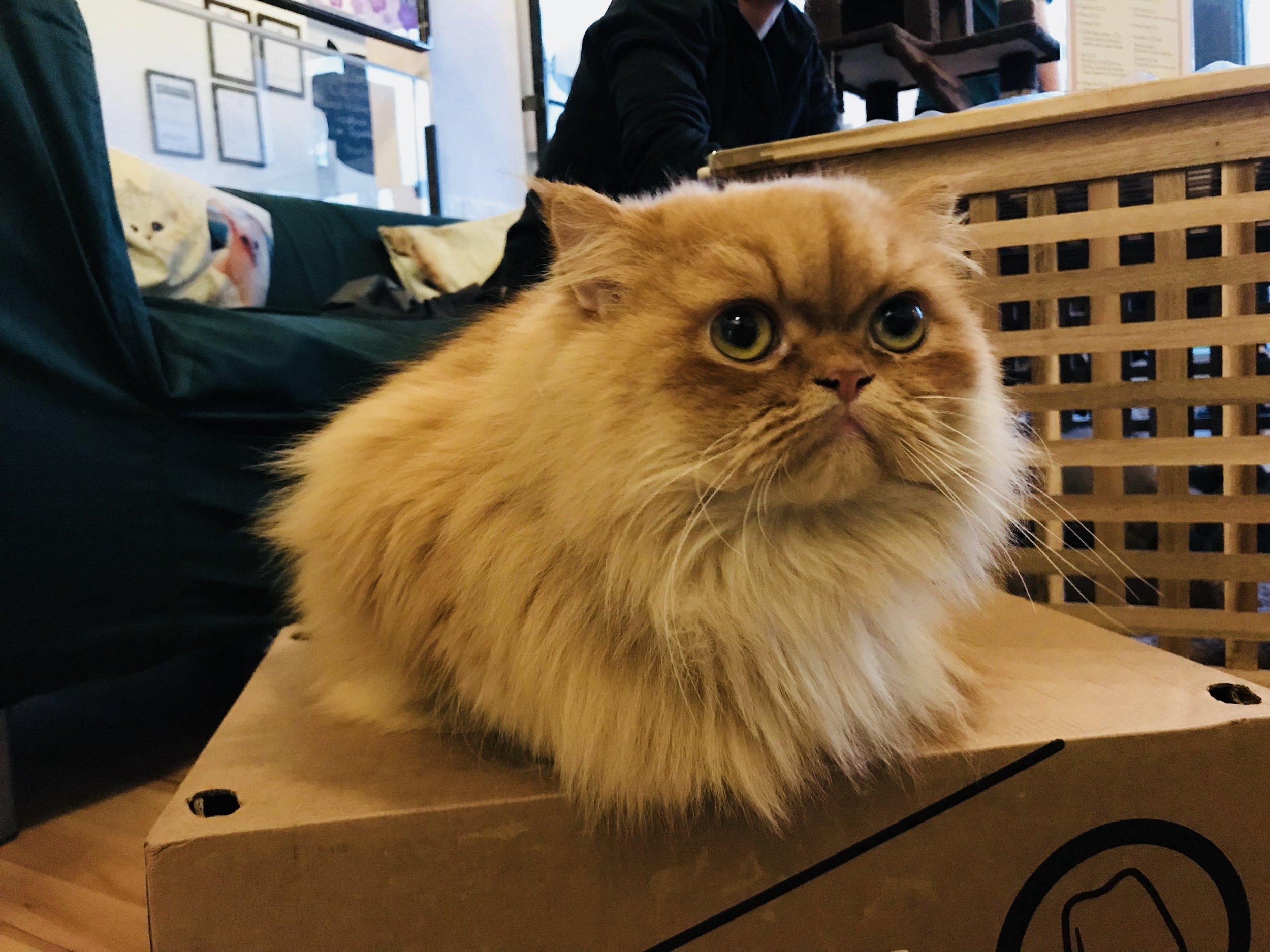 Hugo:  CatPawCino Newcastle