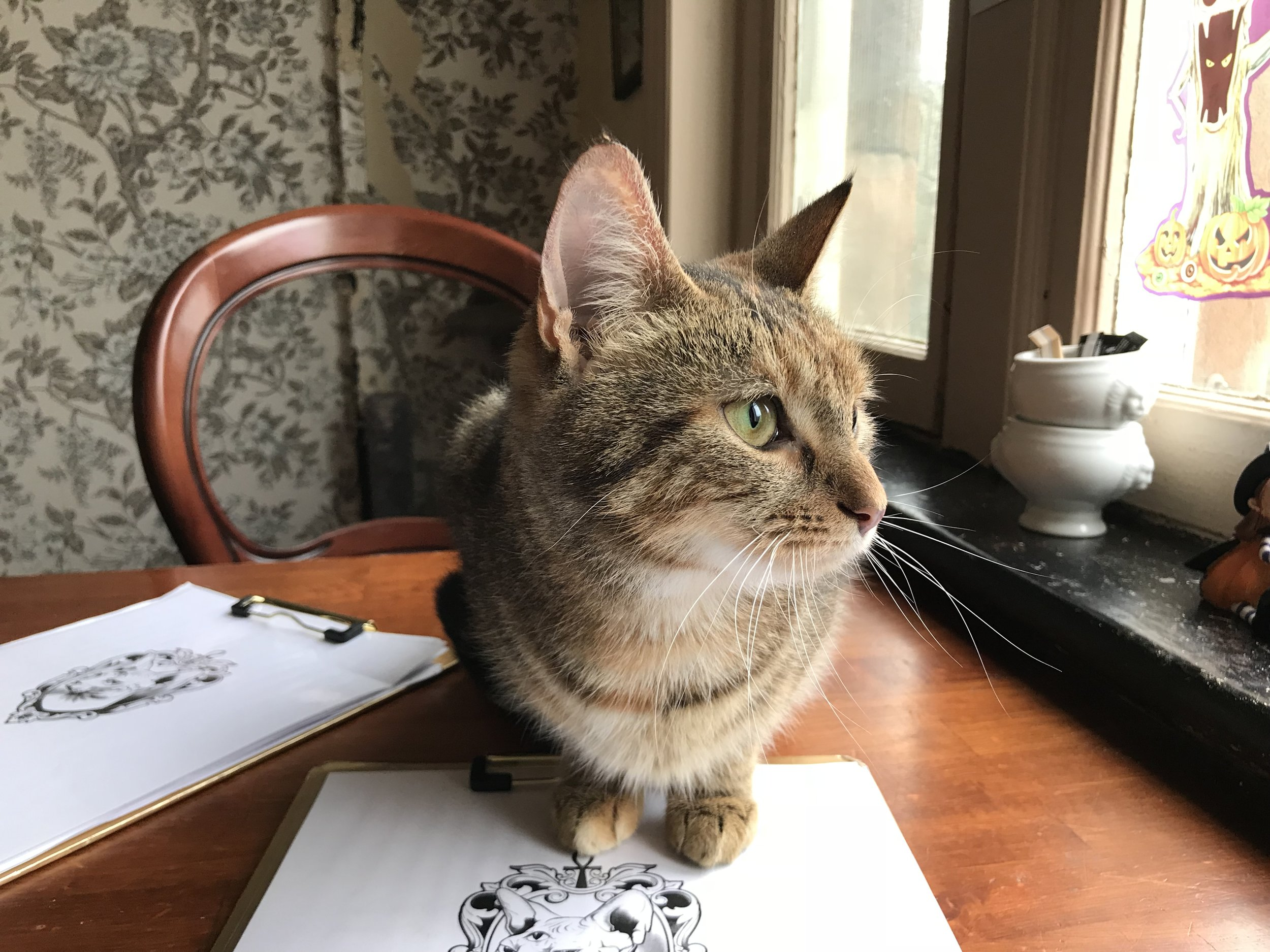 Curious Cats:  Derby, UK