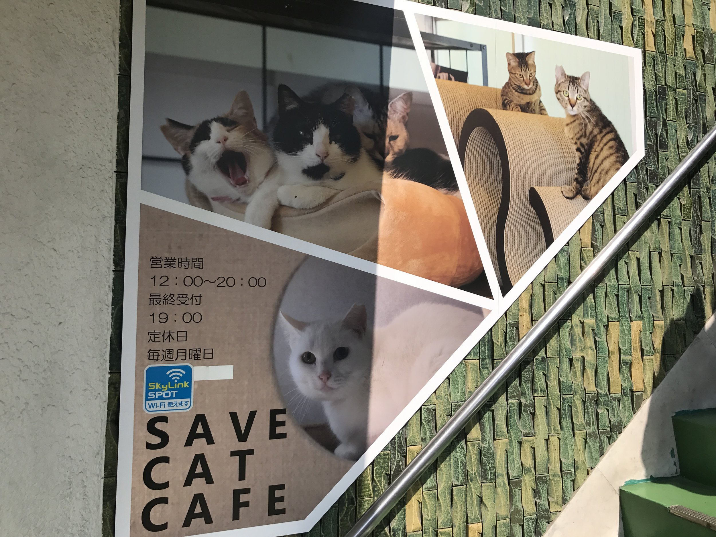 Save Cat Cafe is located near the Tenma metro station in Osaka, Japan