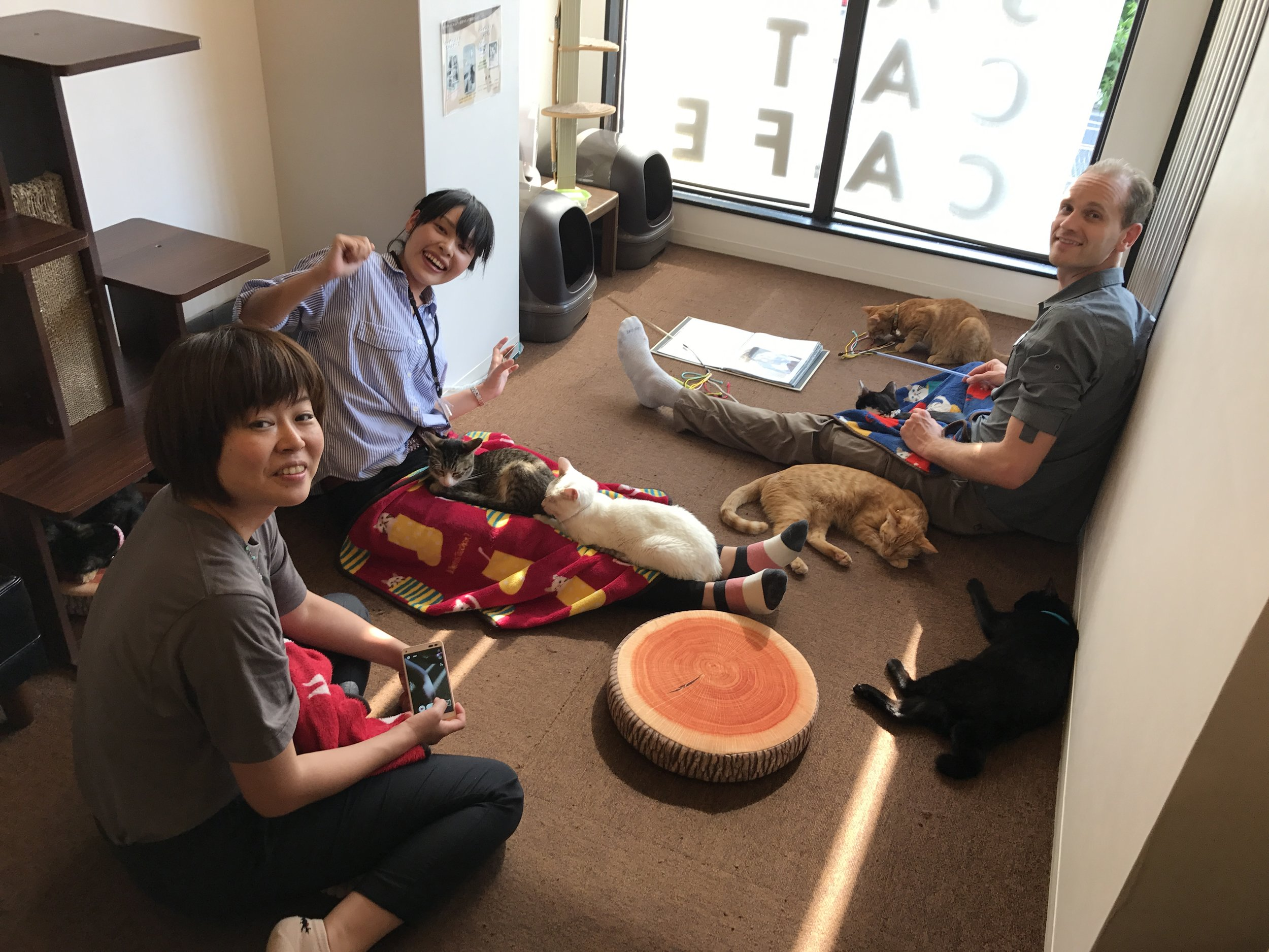 Click here for a complete review of Save Cat Cafe in Osaka, Japan