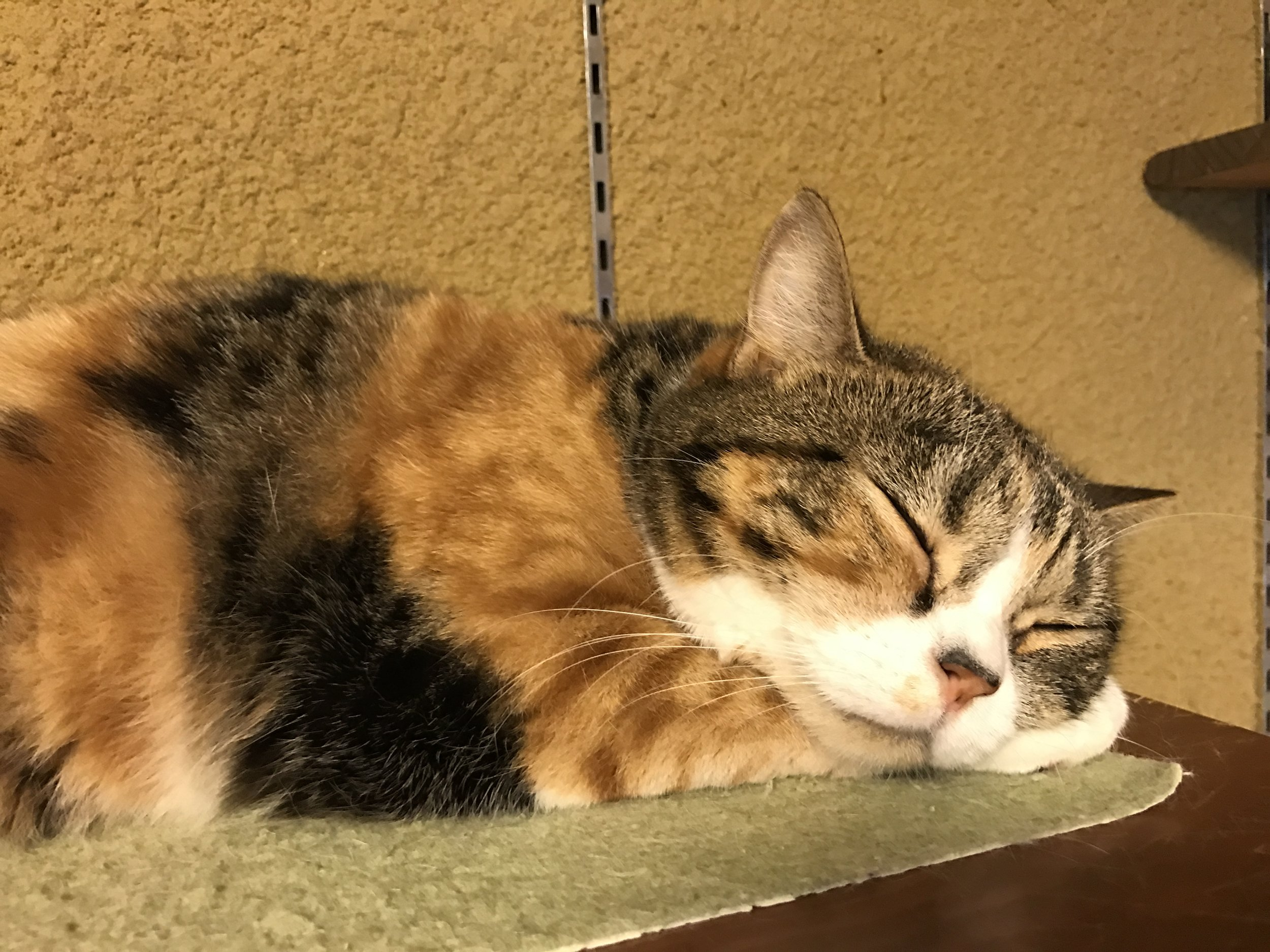 Located in the Kita neighborhood, there are a wide variety of cats in residence at Neko no Jikan
