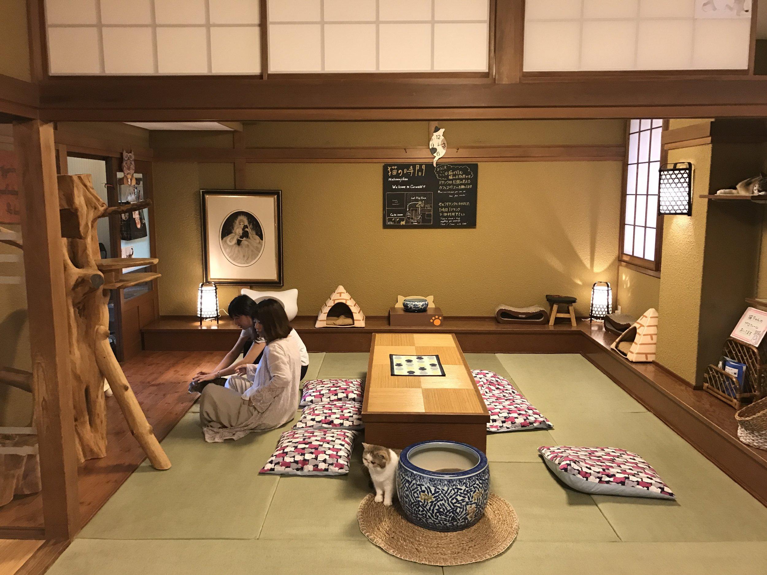 The decor at Neko no Jikan is traditional Japanese, with tatami mats and shoji screens