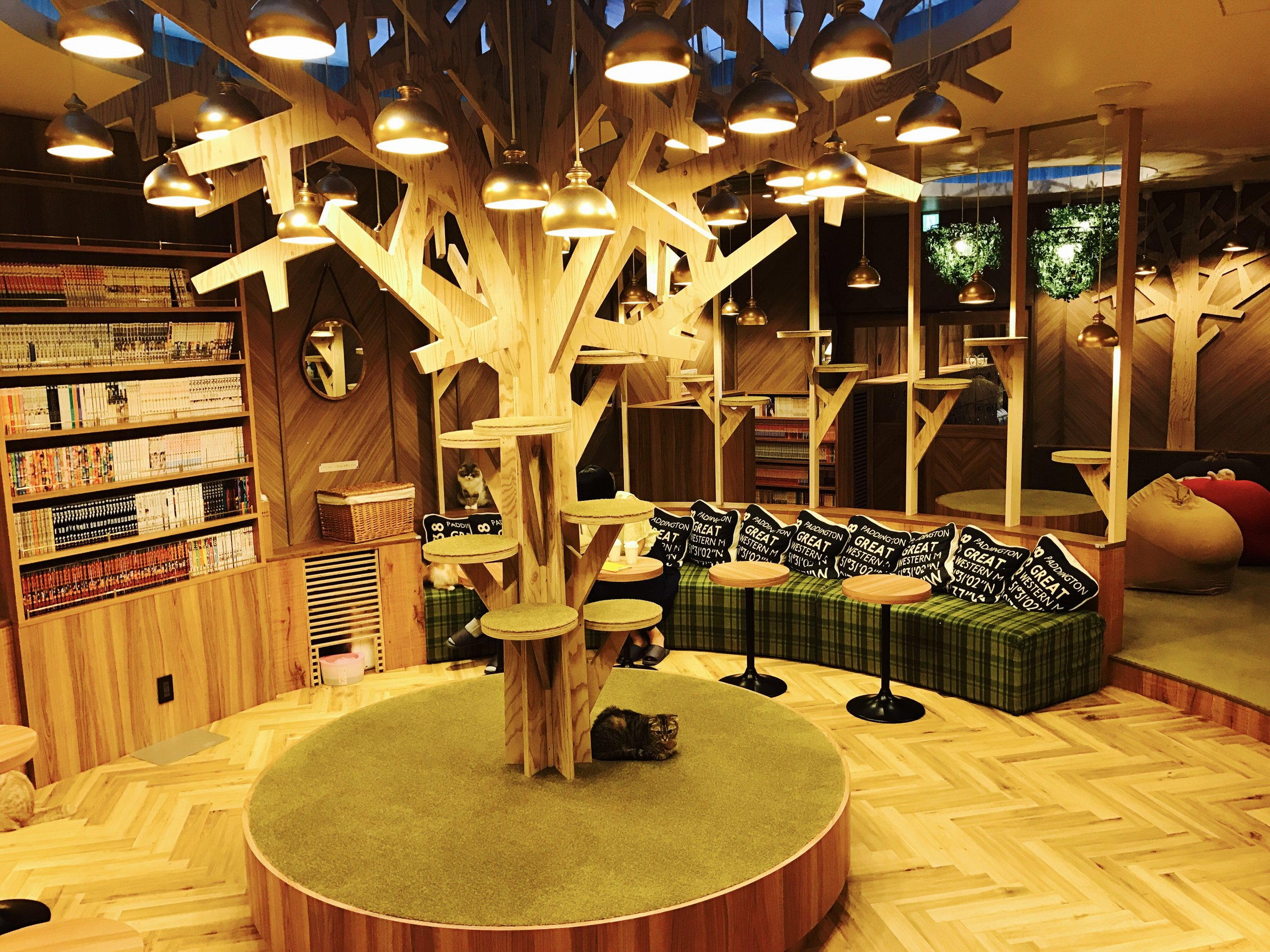 Cafe Mocha is known for its beautiful interiors featuring a signature wooden tree that the cats can climb