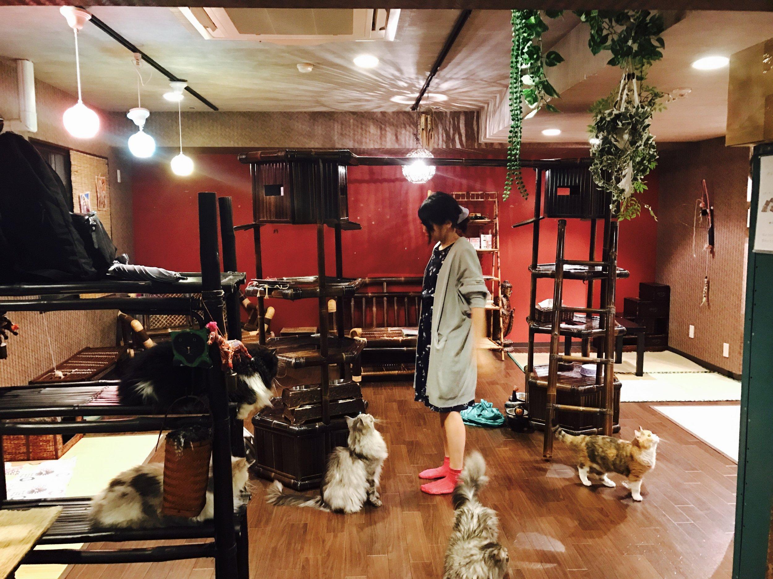 Vintage furniture and zen garden touches enhance the atmosphere at Gurugurudo Neko Cafe