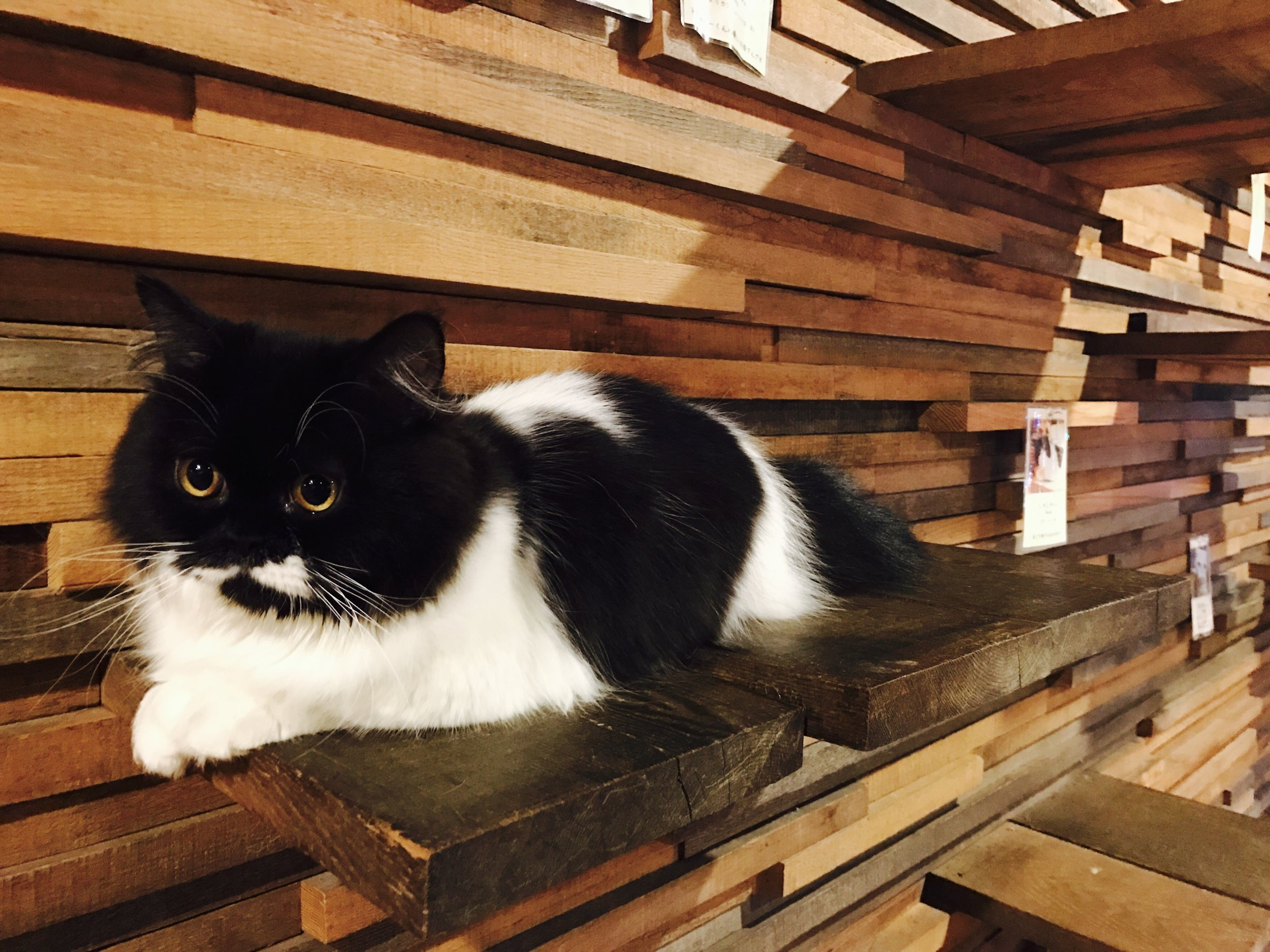 Click here for a complete review of Neko no Jikan Amemura (Cat of Liberty) in Osaka, Japan