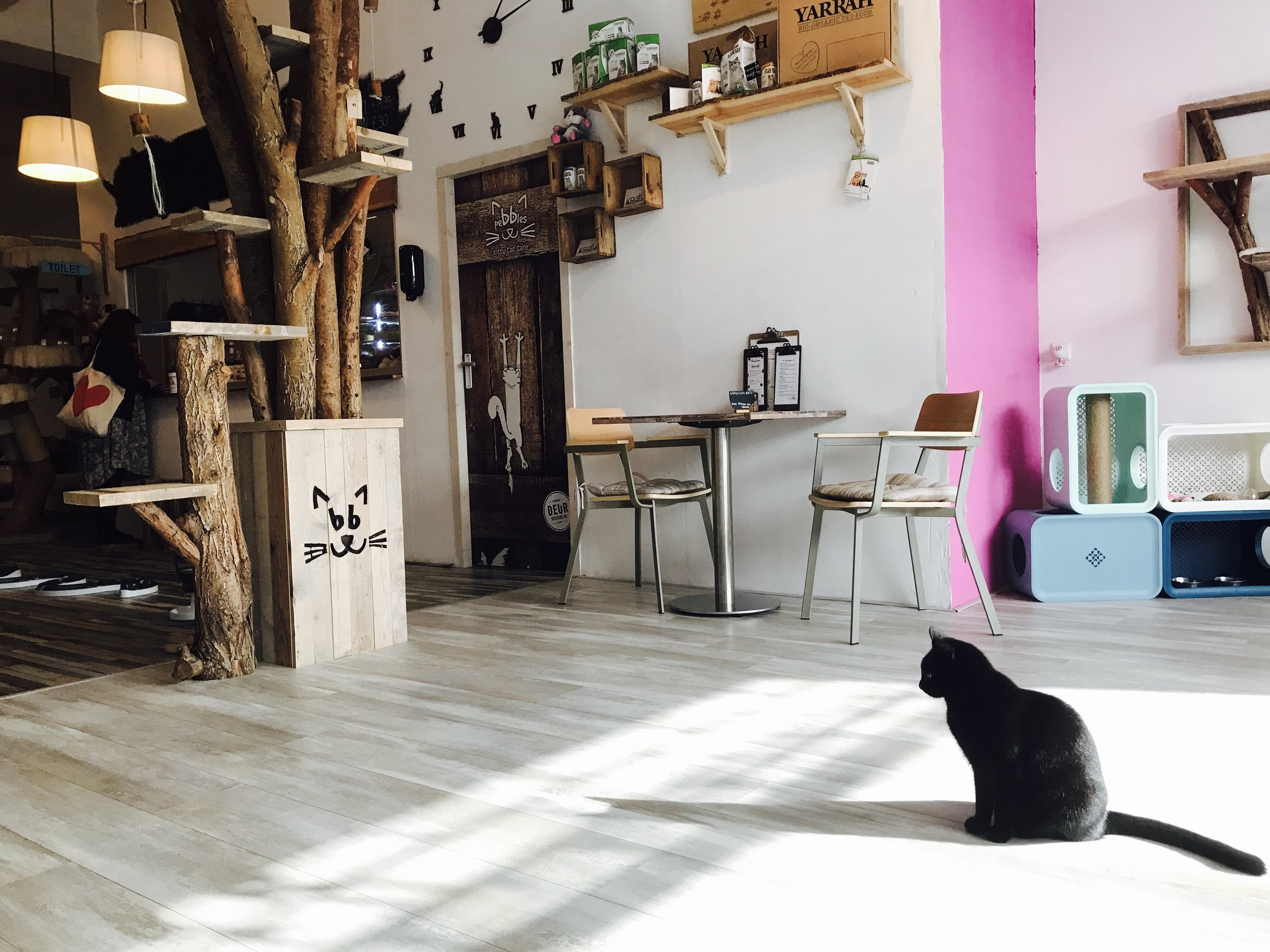 Rotterdam, Netherlands:  Pebbles Kitty Cafe