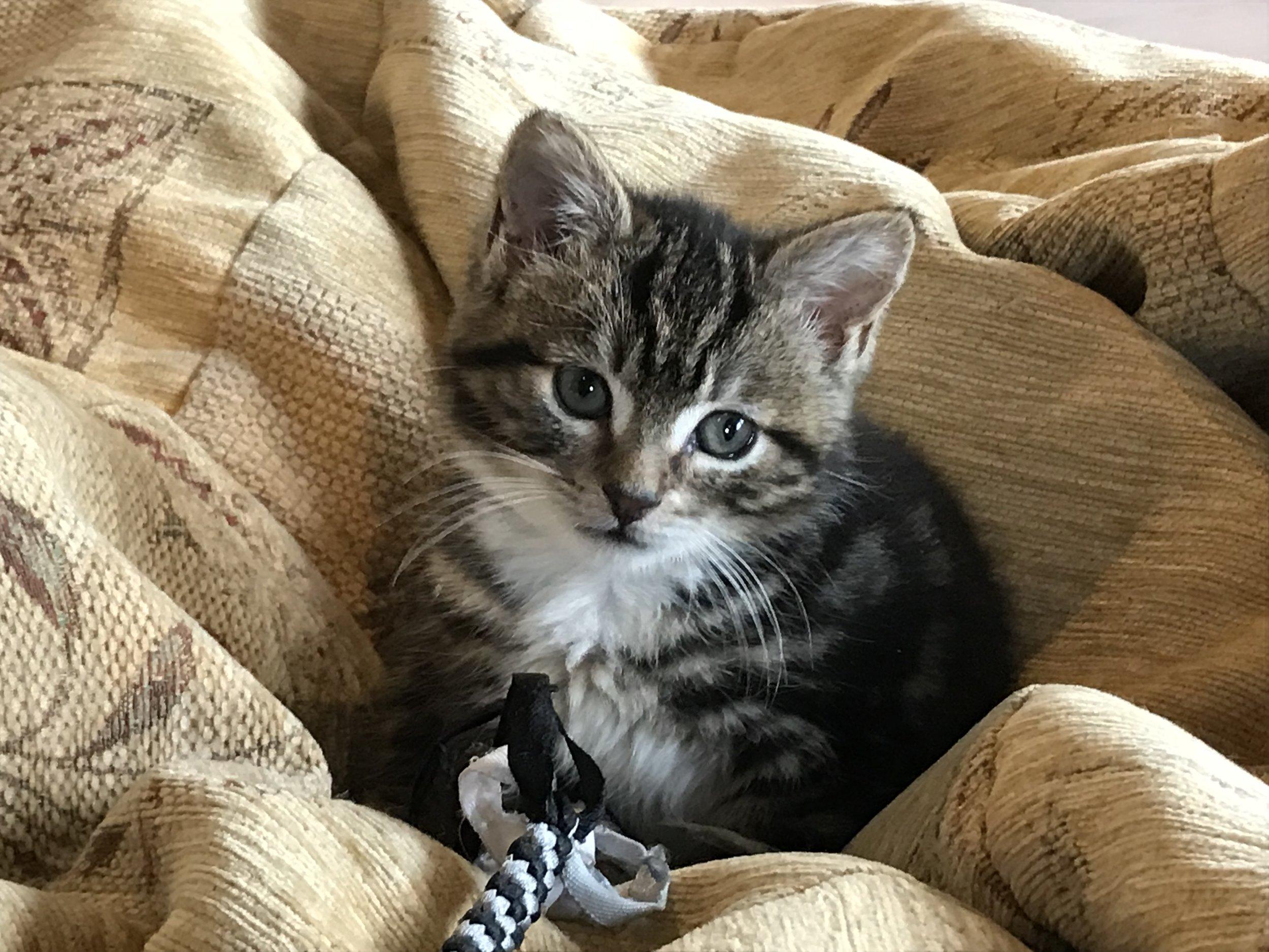 Cat_lounge_dublin-045.jpg