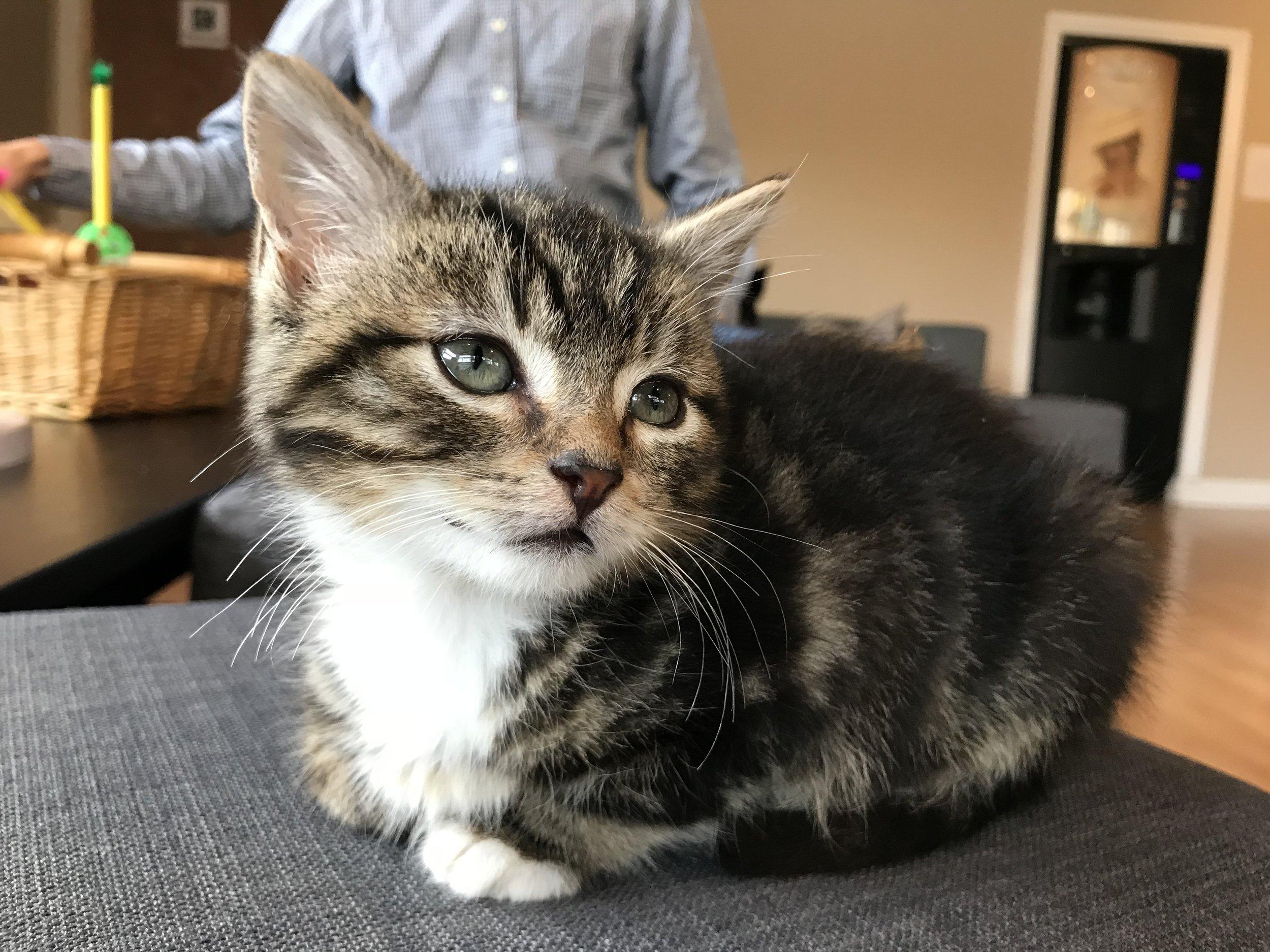 Cat_lounge_dublin-026.jpg