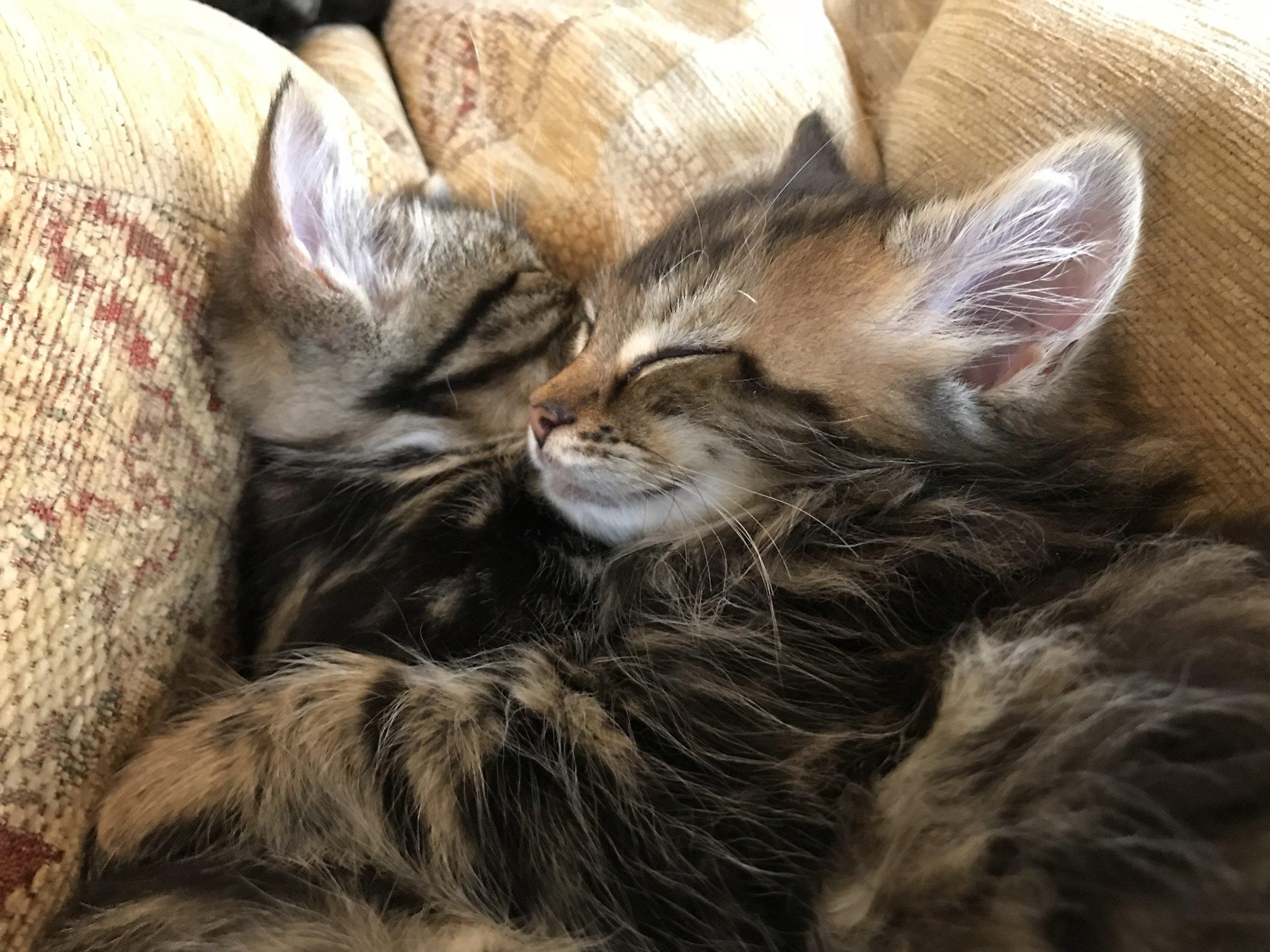 Cat_lounge_dublin-095.jpg