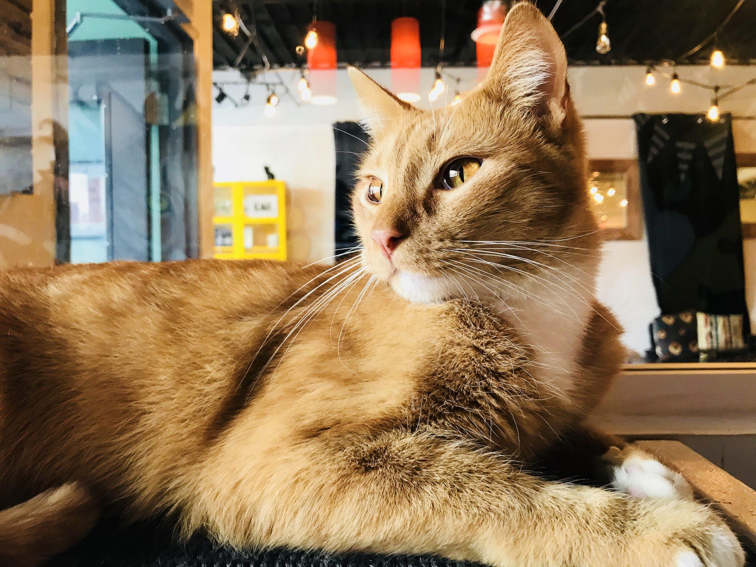 Java Cats-22.jpg