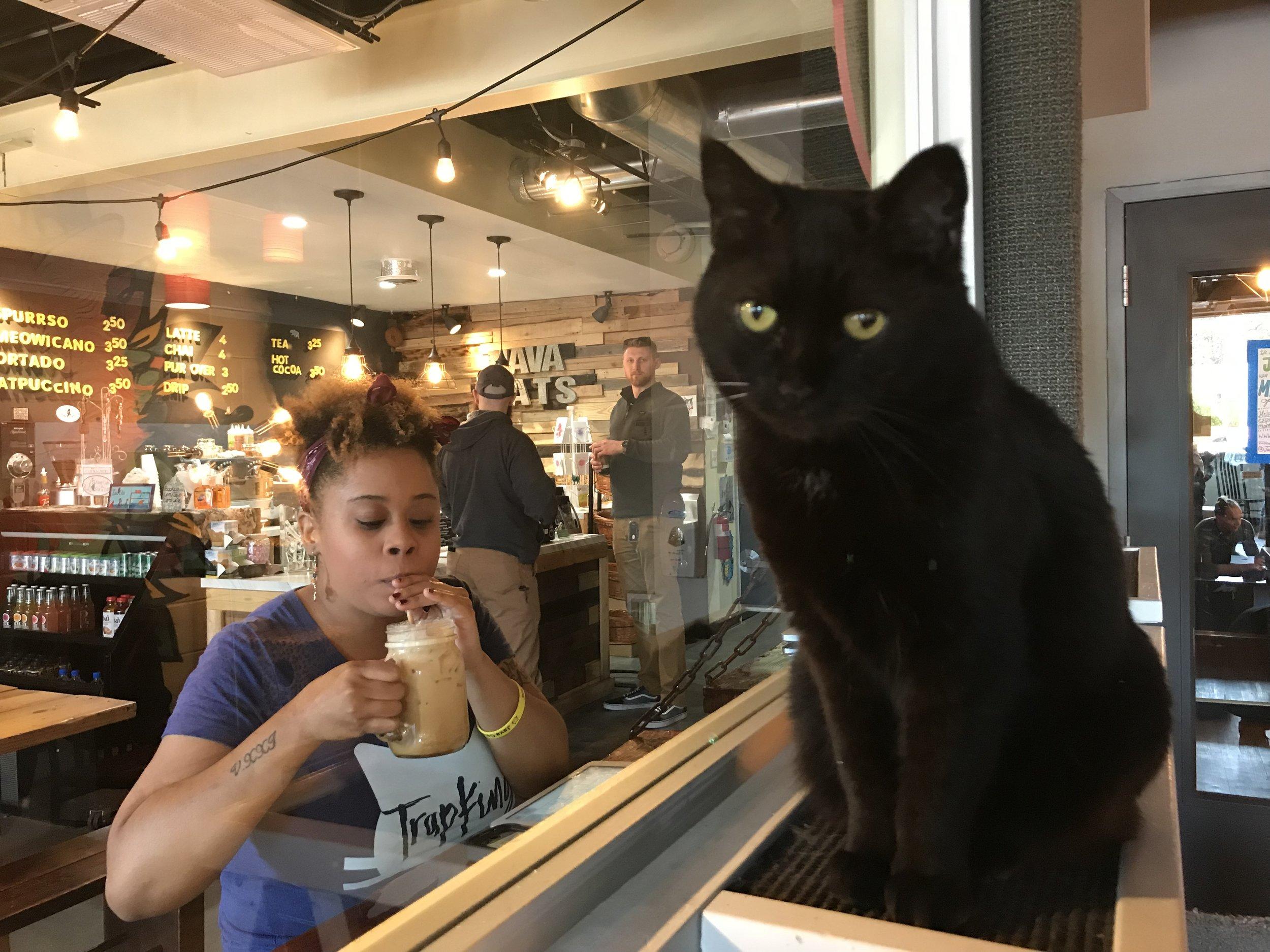 Java Cats-19.jpg