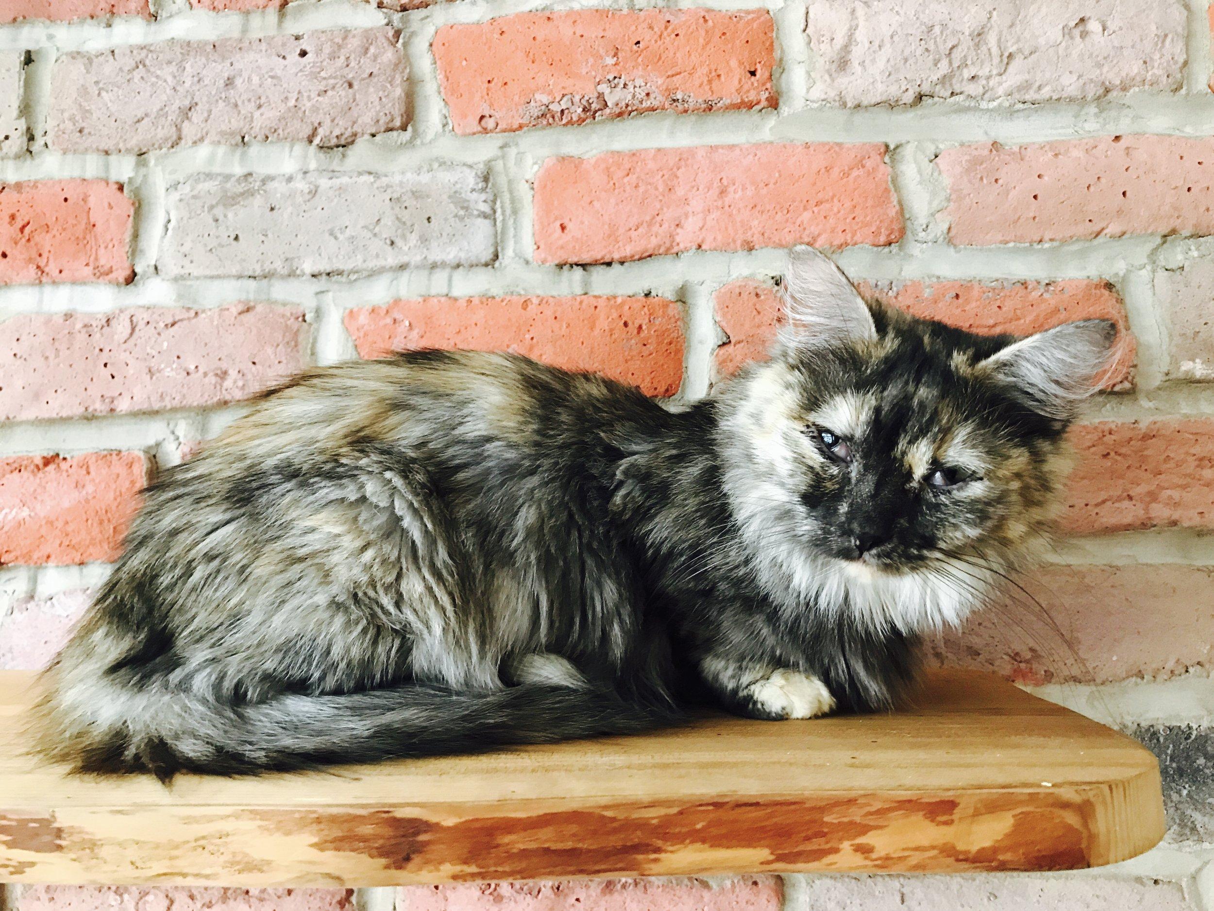 CatVillageNorth-01.jpg