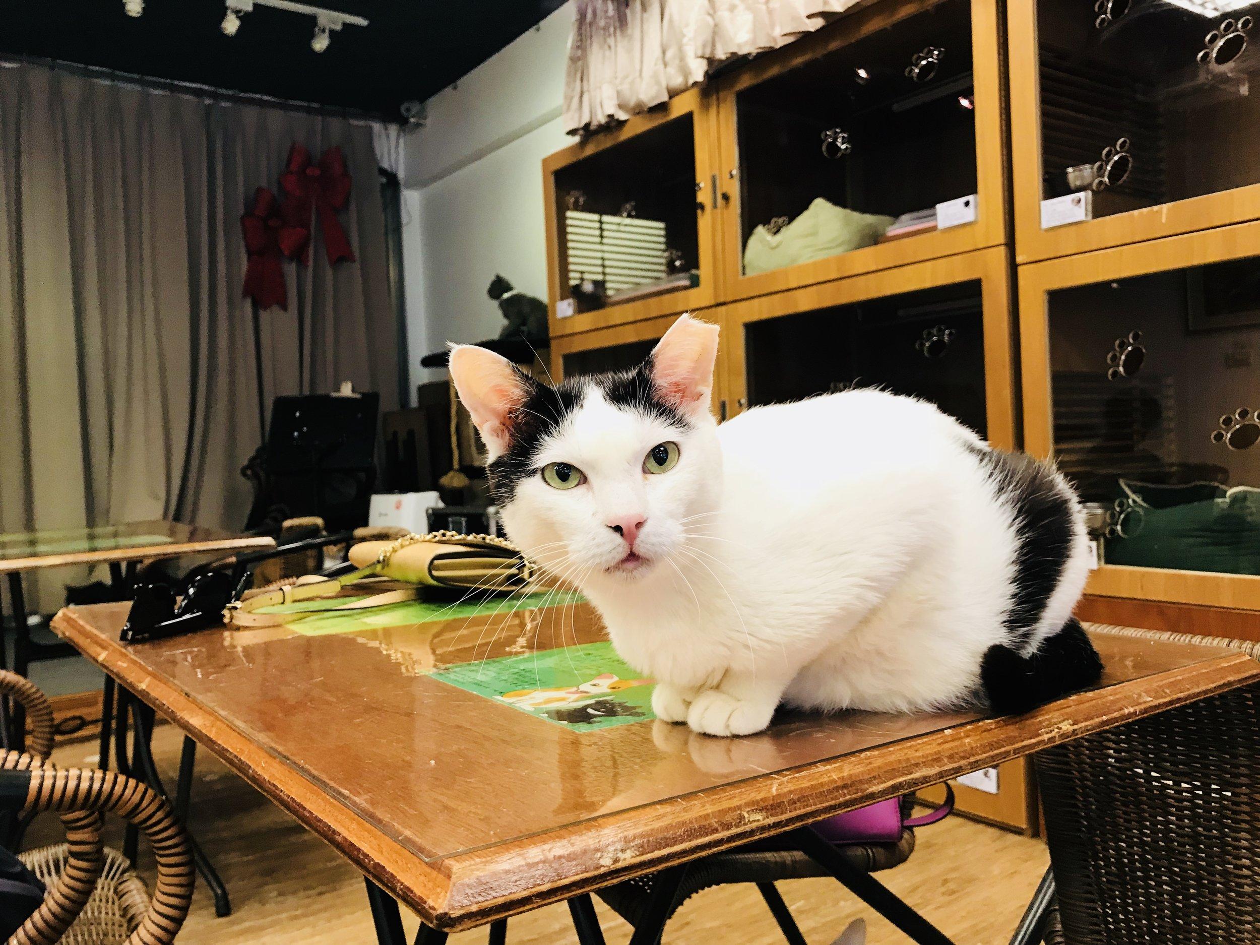 Music&Cats-12.jpg