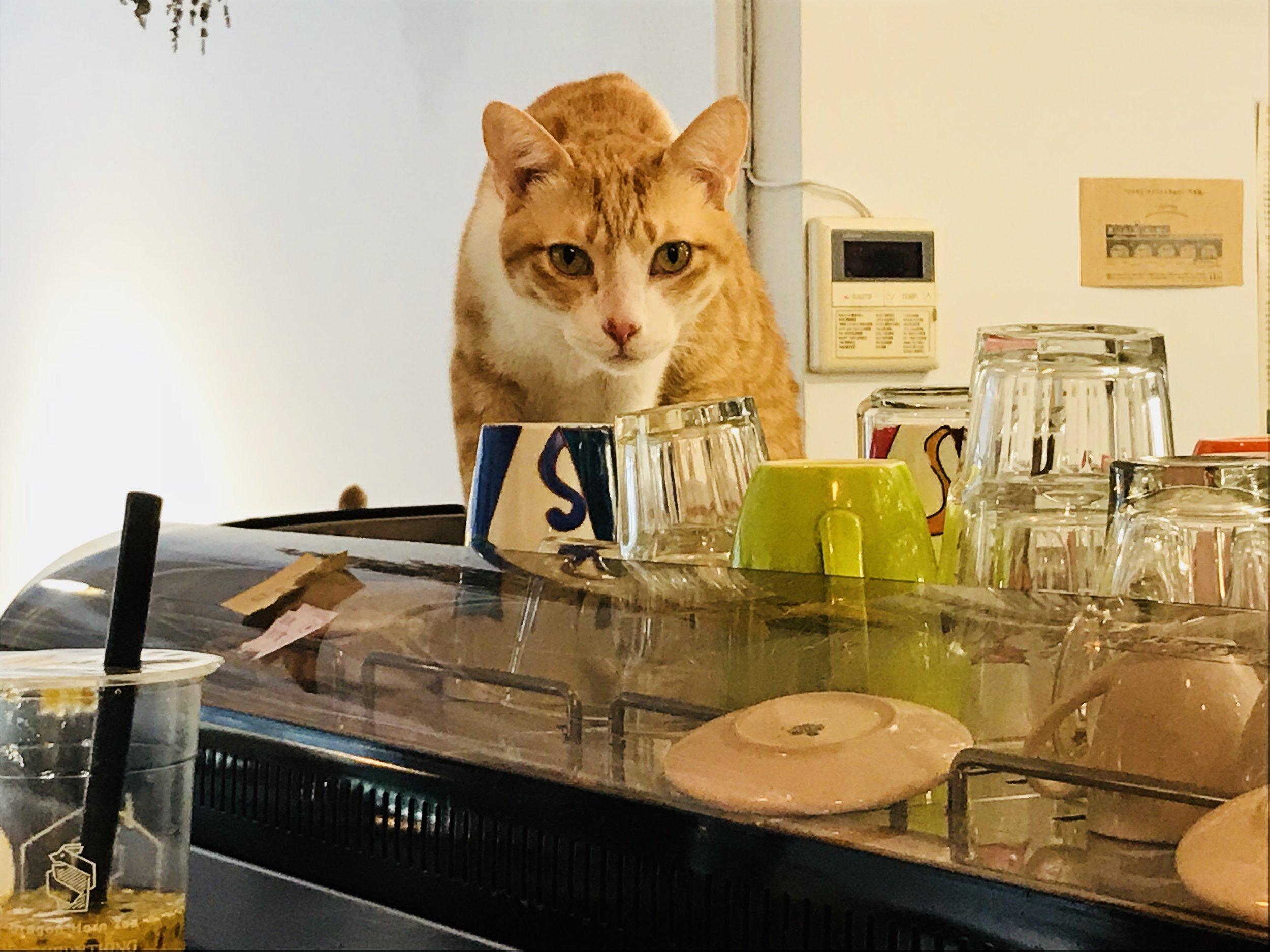 Cat JPG-01.jpg