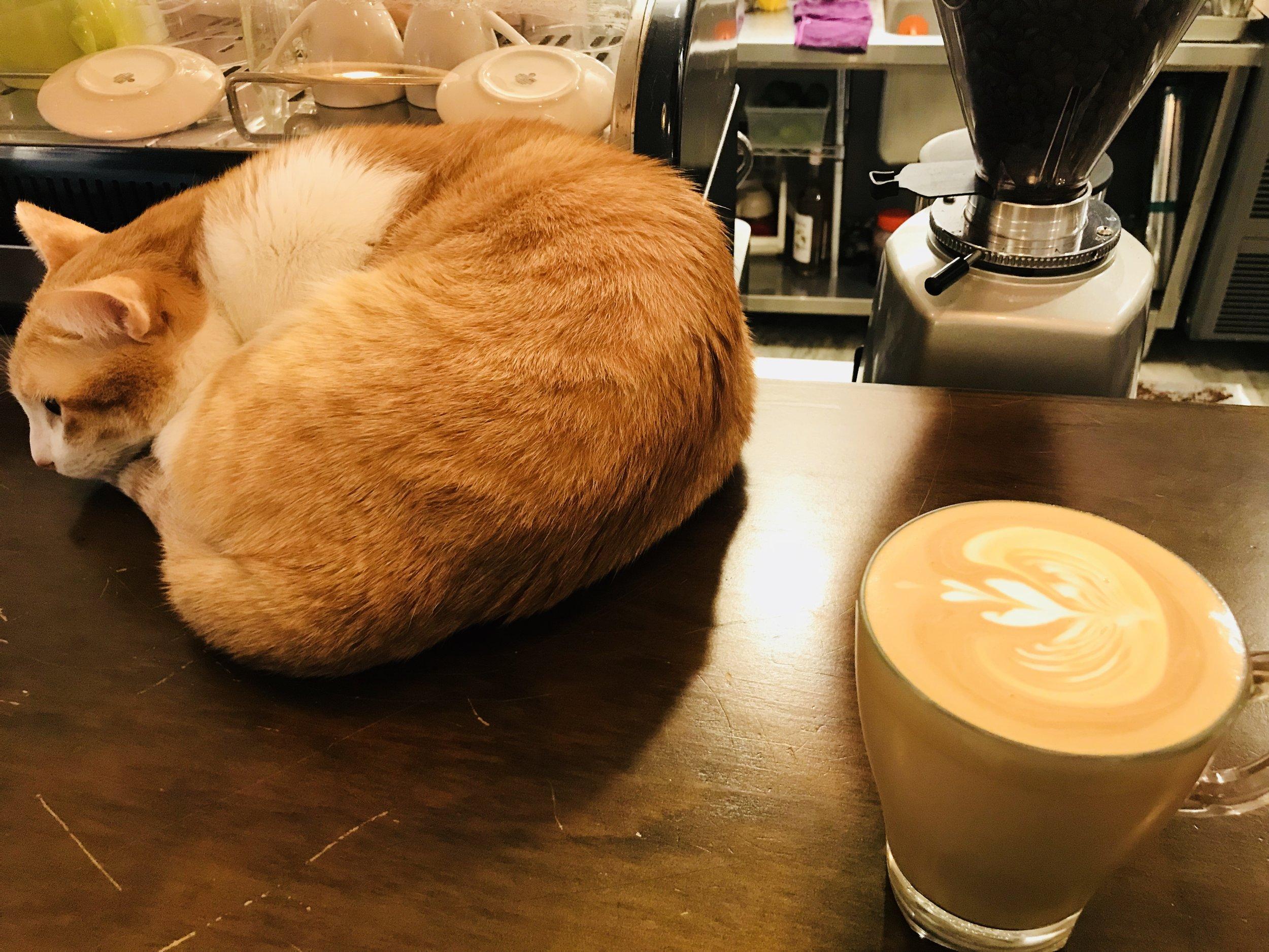 Cat JPG-09.jpg