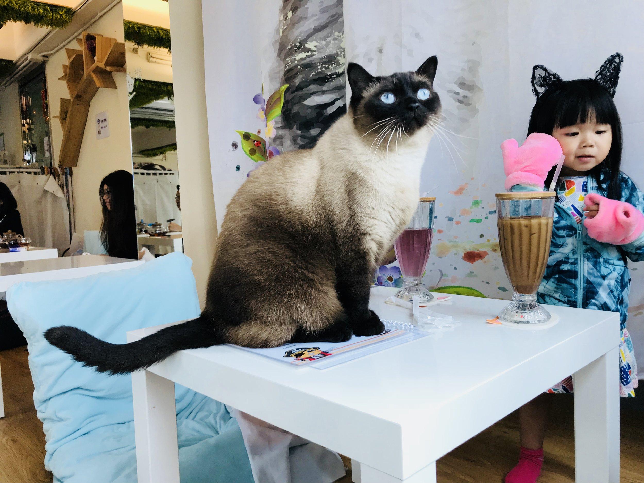 The Cats Tea Room-81.jpg