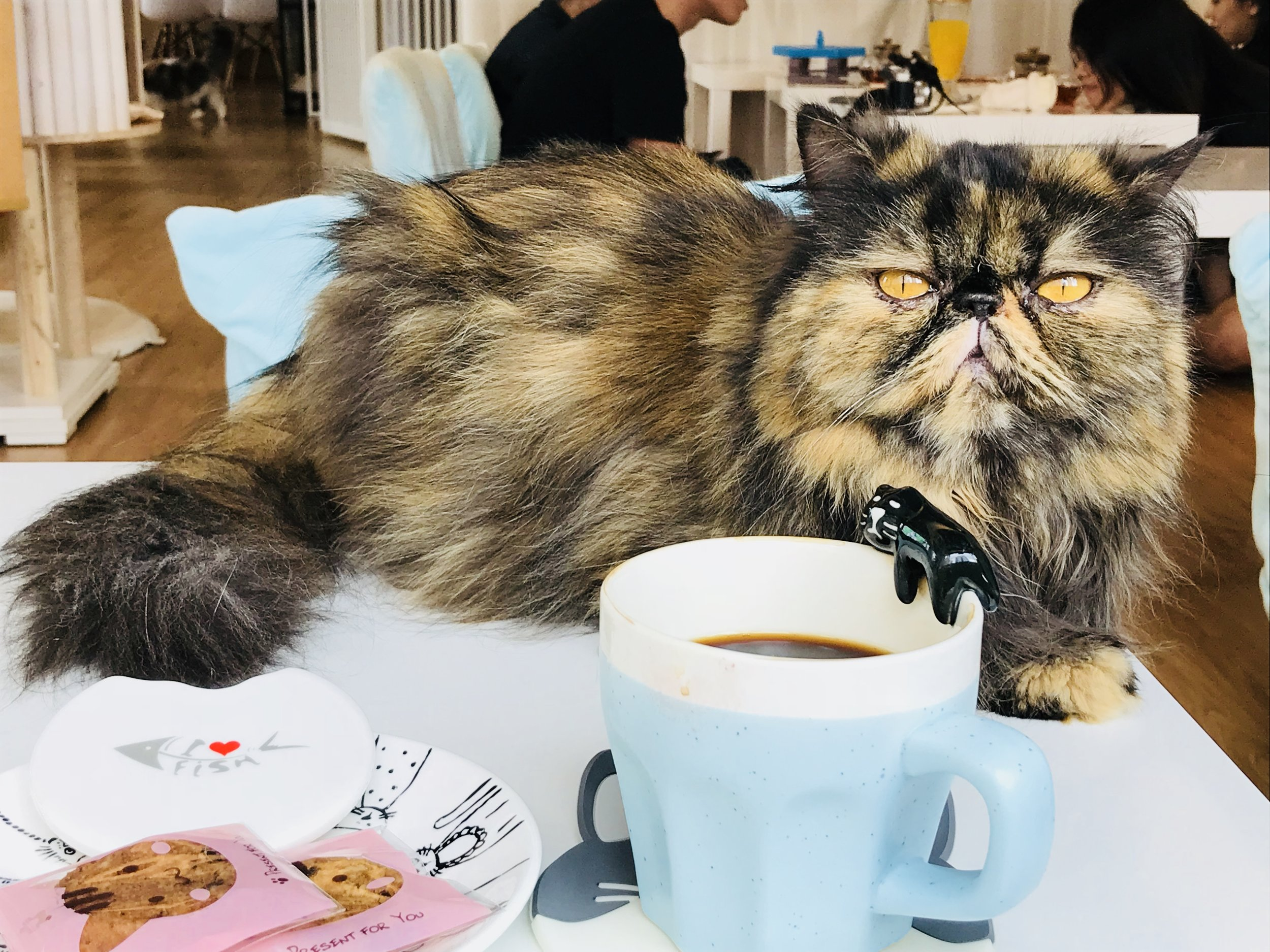 The Cats Tea Room-60.jpg