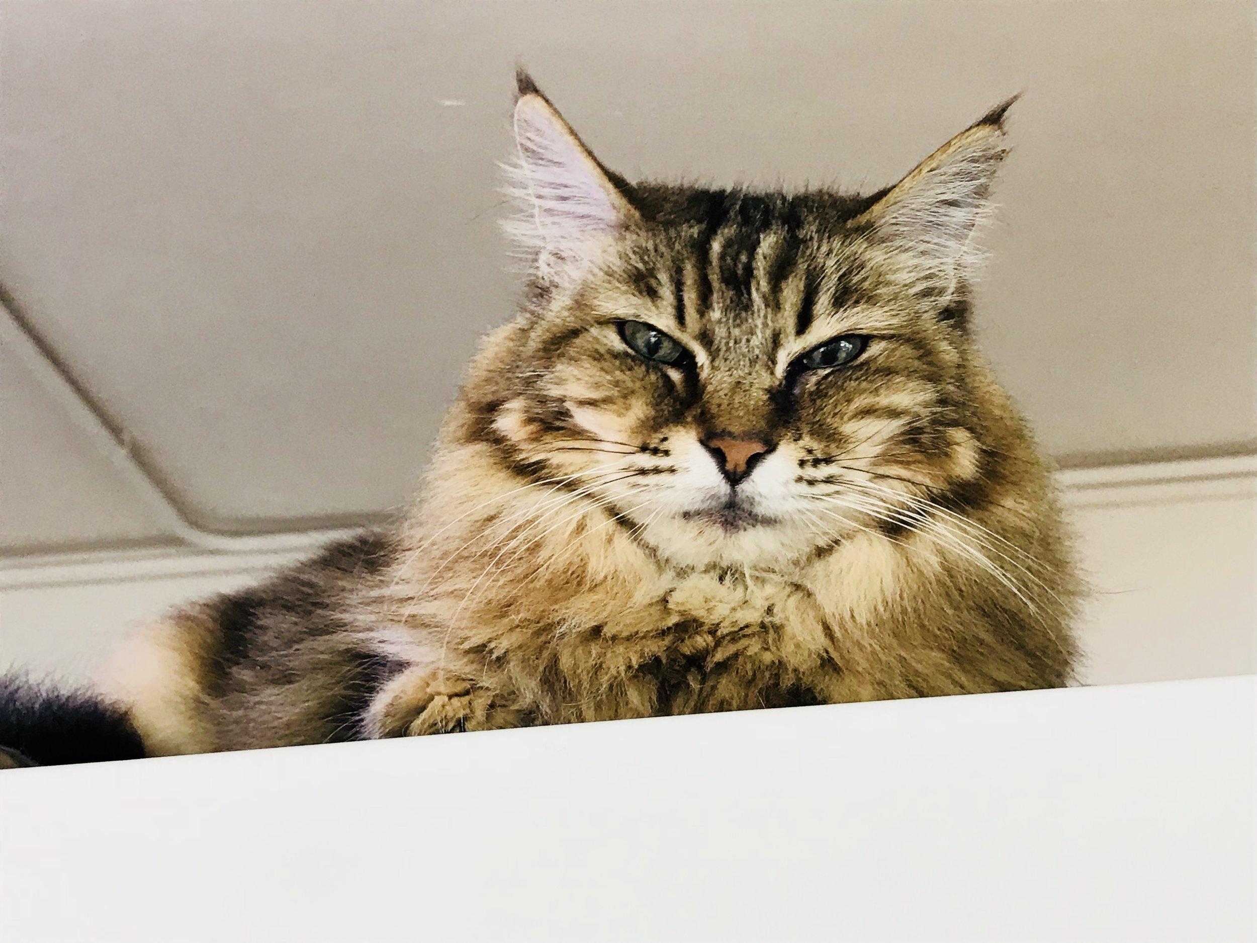 The Cats Tea Room-18.jpg